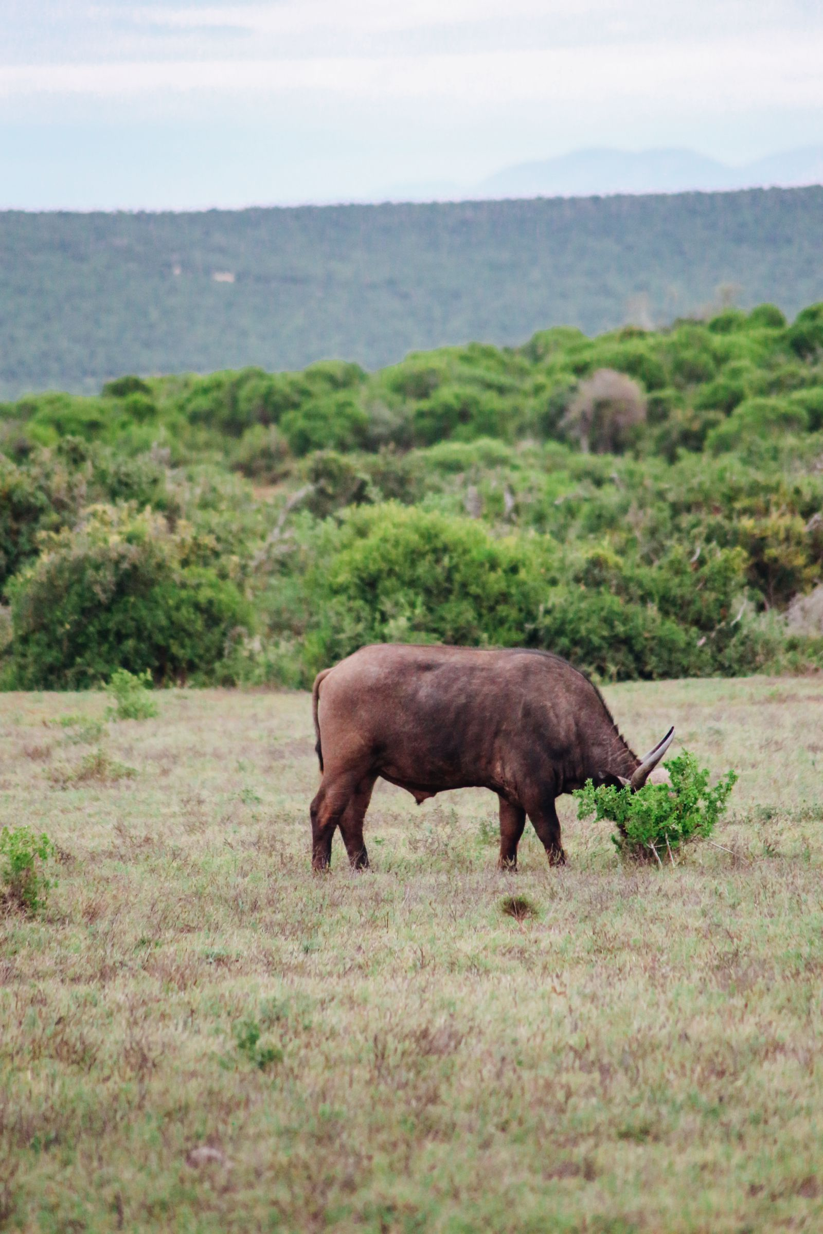 The Last 24 Hours In South Africa's Eastern Cape, Port Elizabeth, Addo National Park (30)