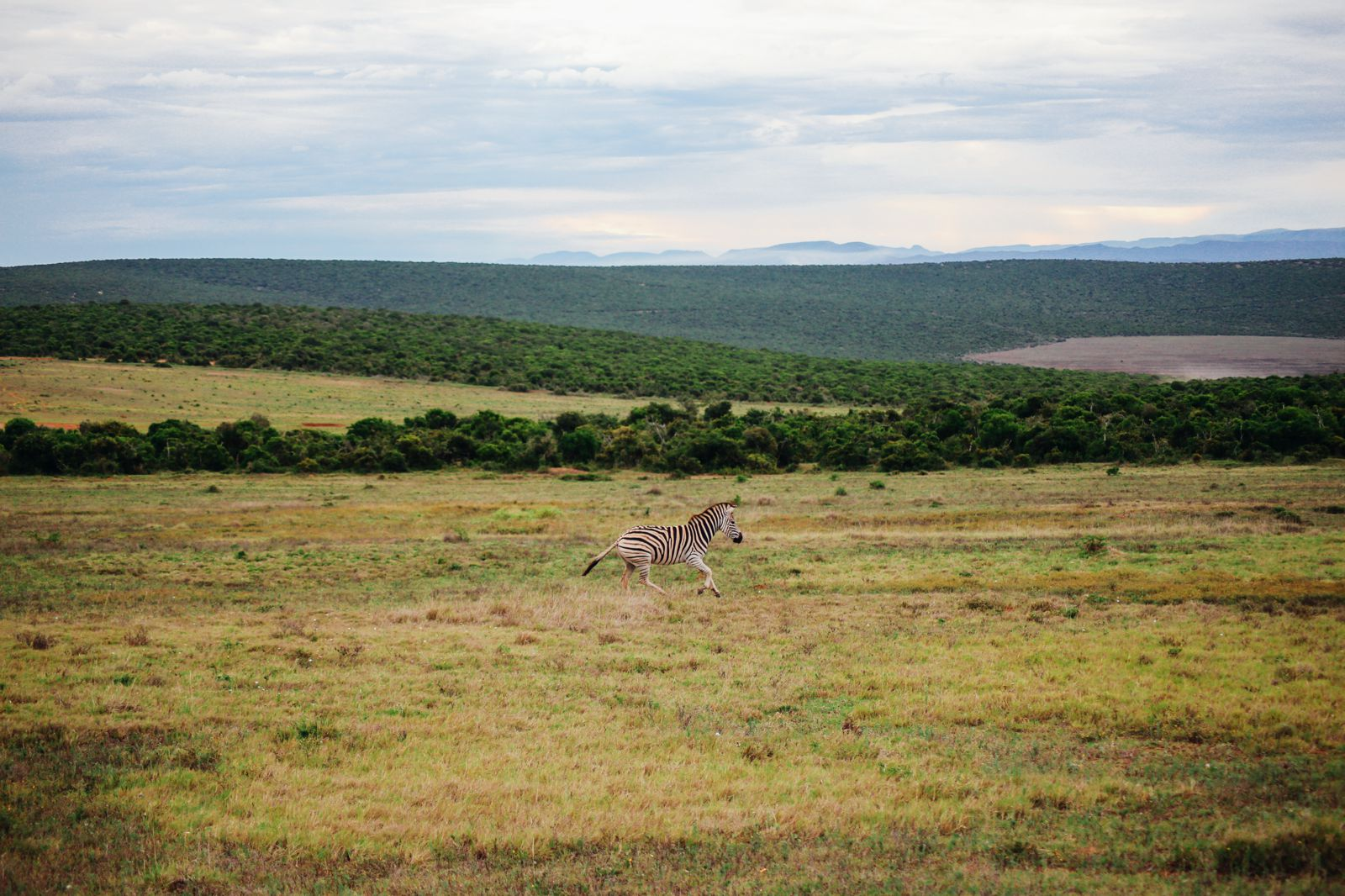 The Last 24 Hours In South Africa's Eastern Cape, Port Elizabeth, Addo National Park (35)