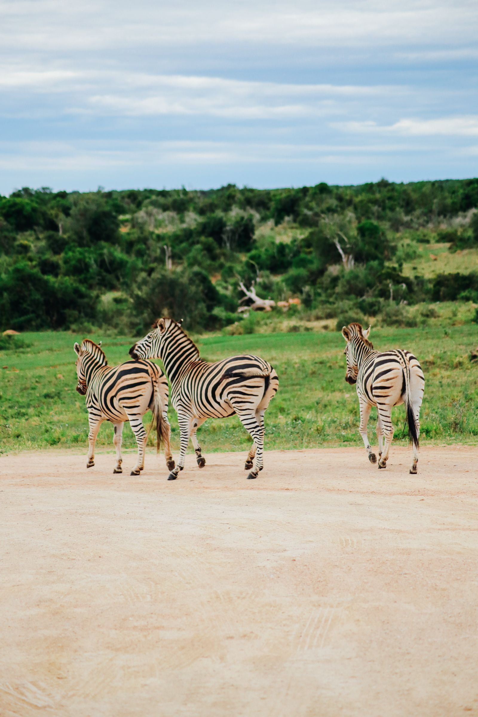 The Last 24 Hours In South Africa's Eastern Cape, Port Elizabeth, Addo National Park (36)