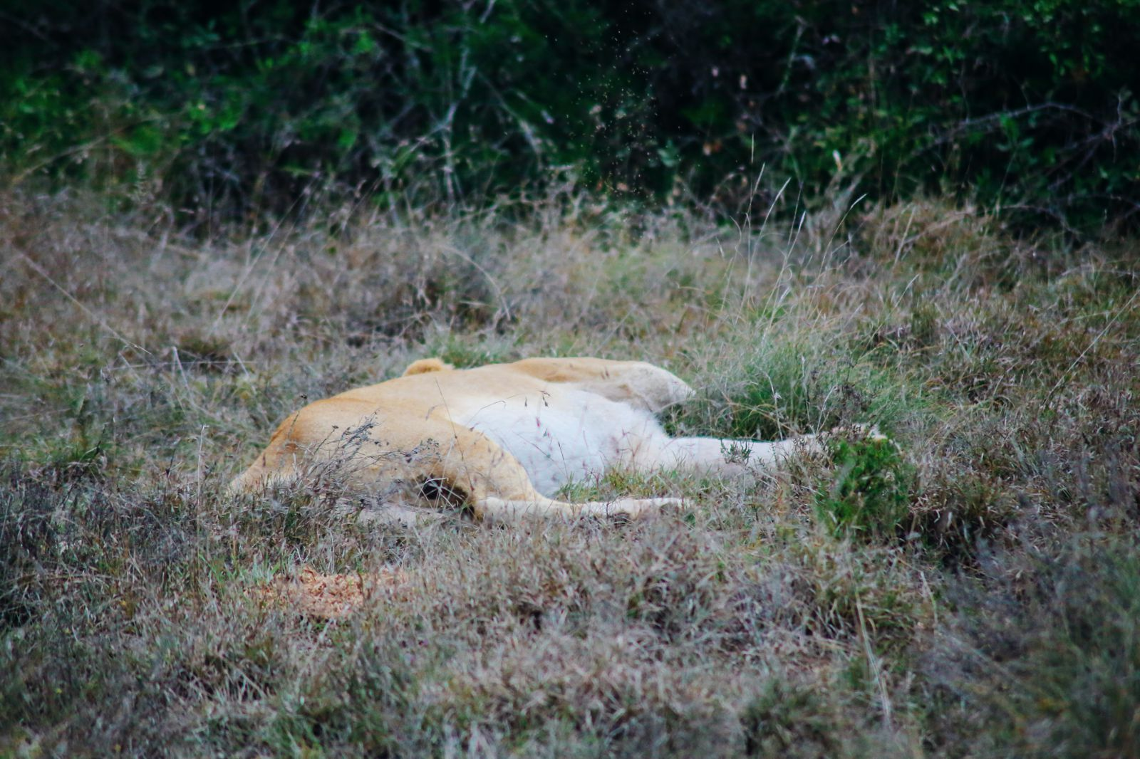 The Last 24 Hours In South Africa's Eastern Cape, Port Elizabeth, Addo National Park (43)