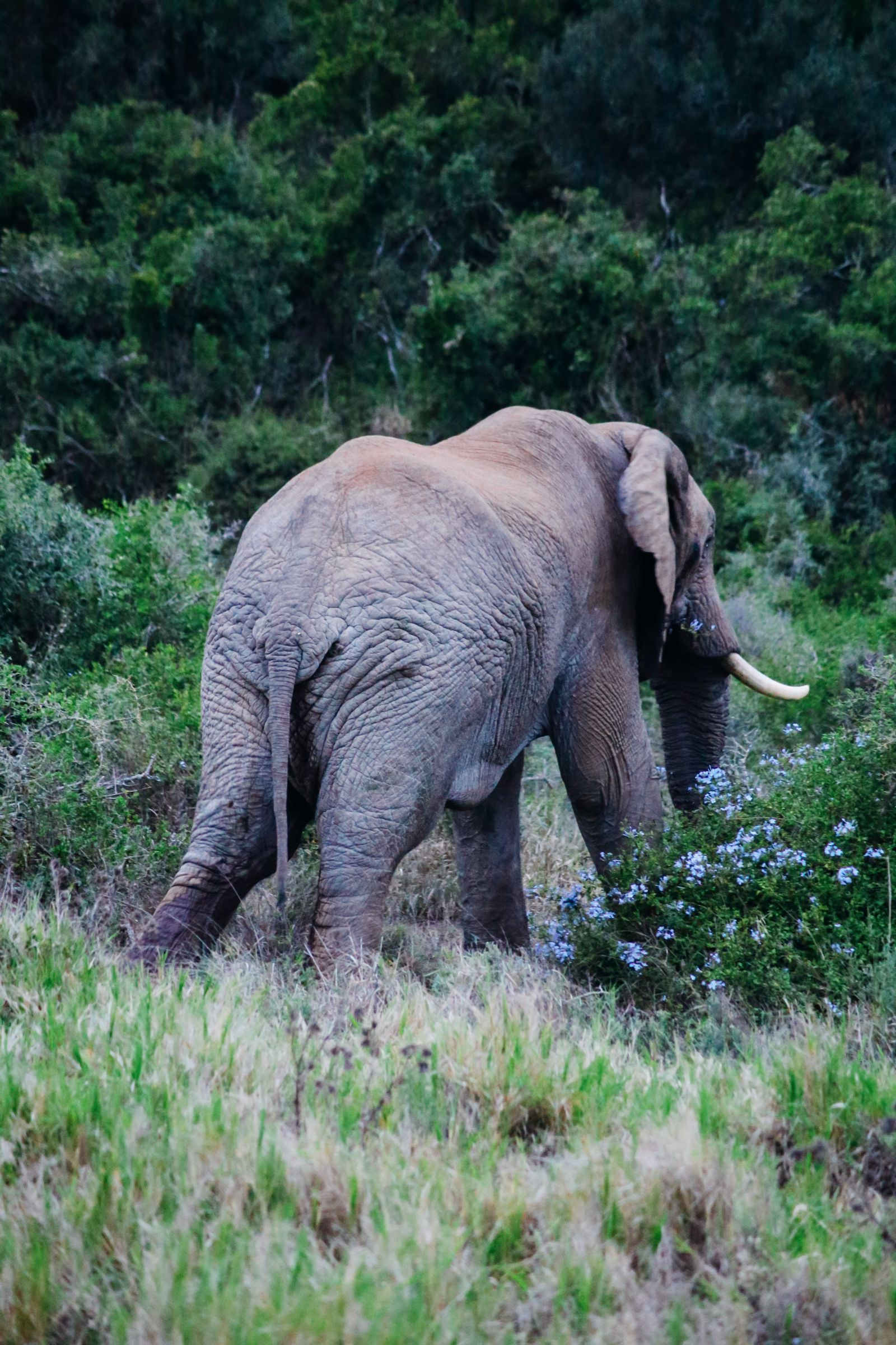 The Last 24 Hours In South Africa's Eastern Cape, Port Elizabeth, Addo National Park (47)