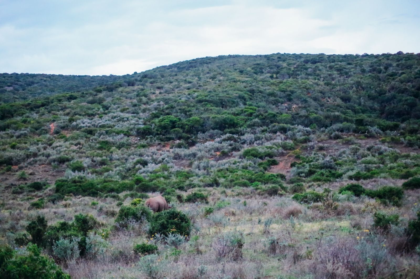 The Last 24 Hours In South Africa's Eastern Cape, Port Elizabeth, Addo National Park (50)