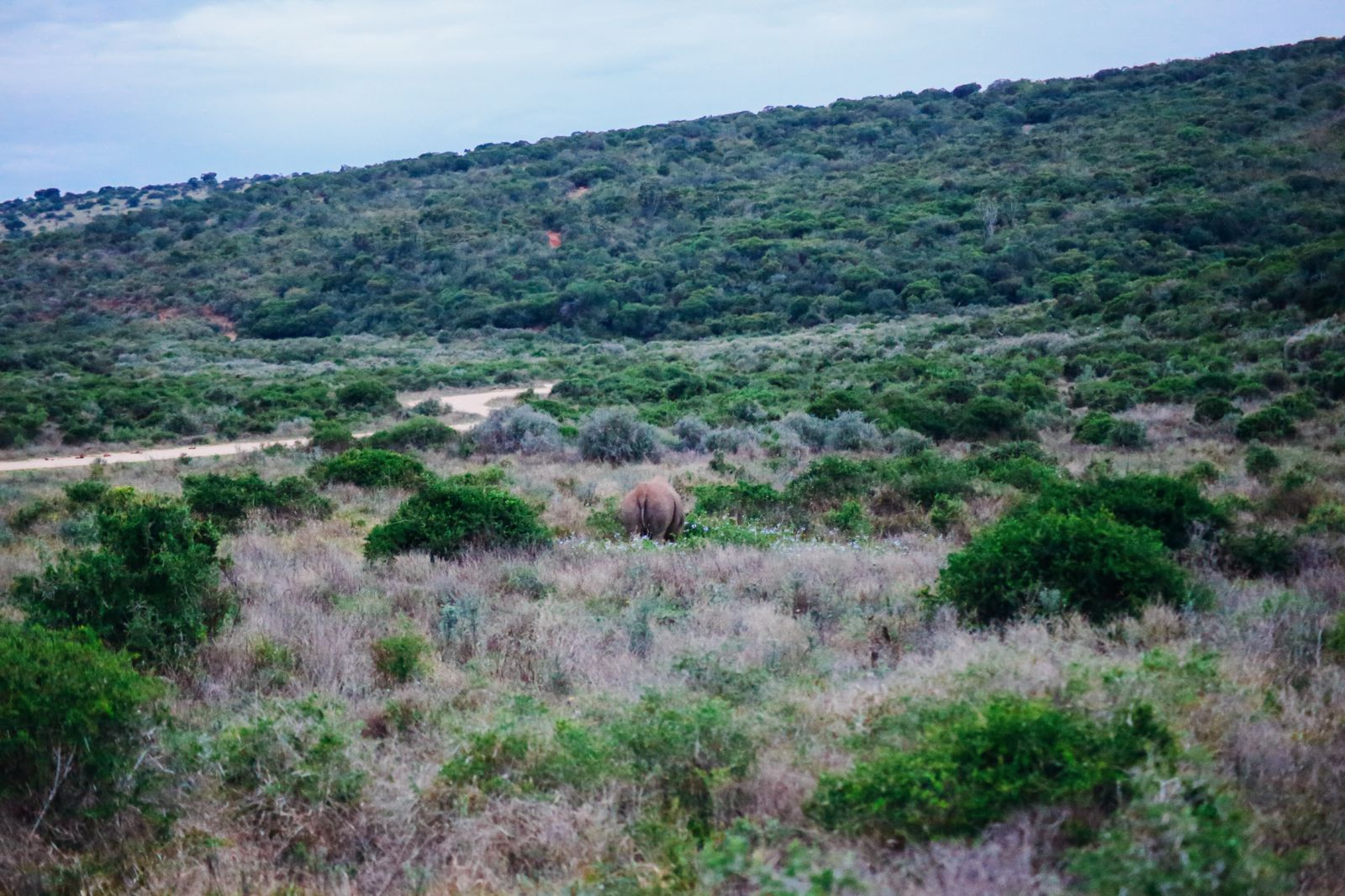 The Last 24 Hours In South Africa's Eastern Cape, Port Elizabeth, Addo National Park (51)