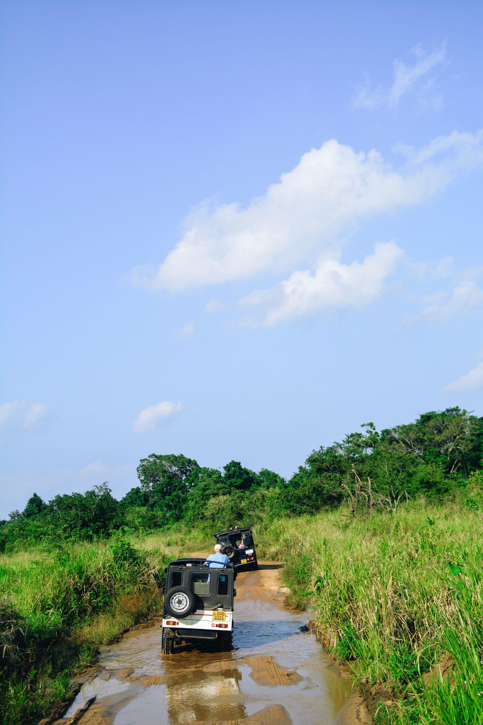 Safari in Mineriya National Park Sri Lanka Elephants (20)