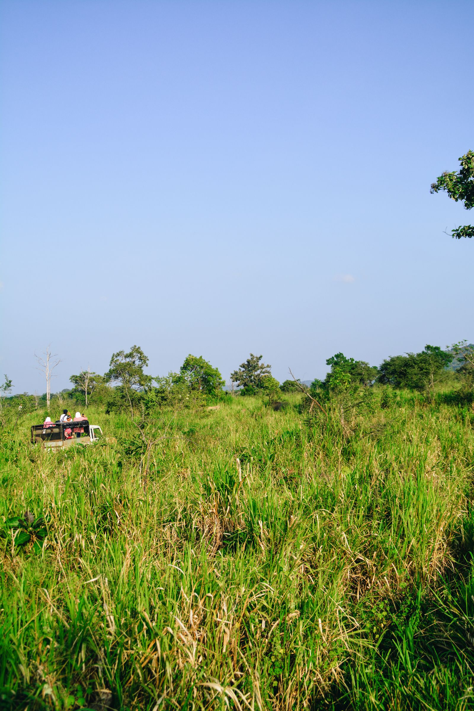 Safari in Mineriya National Park Sri Lanka Elephants (12)