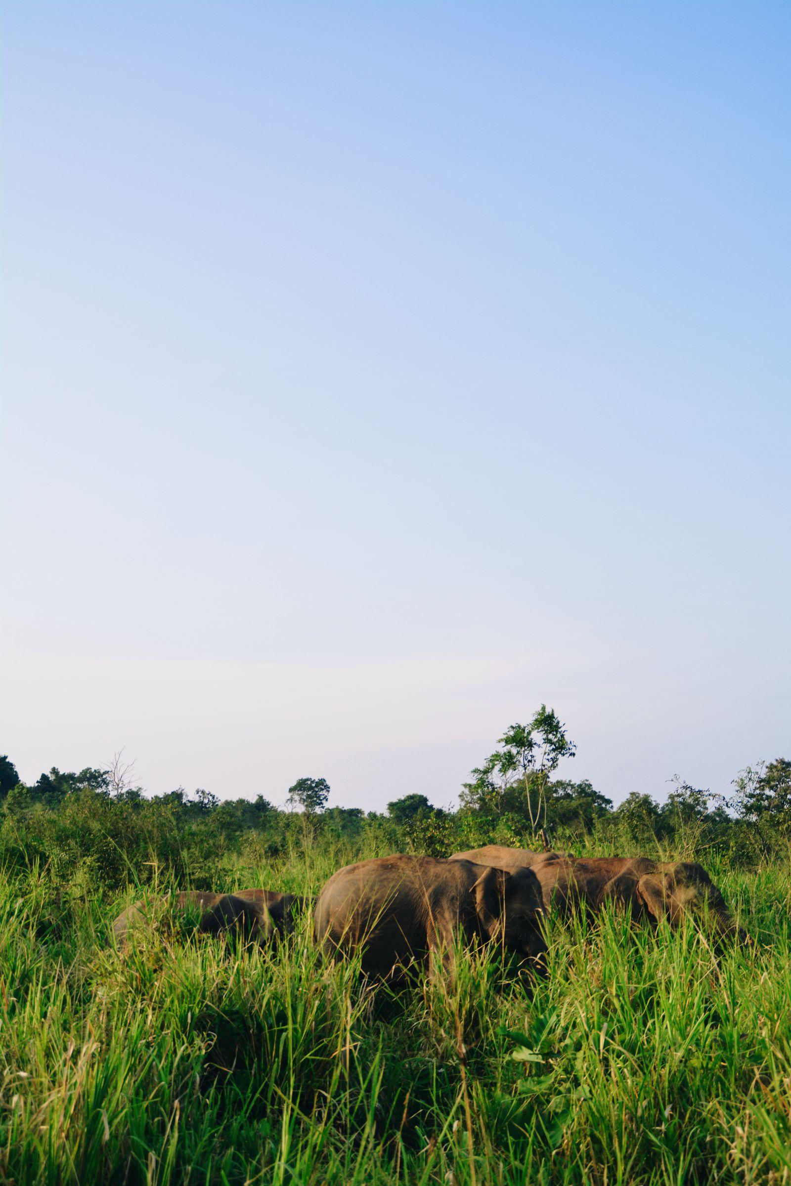 Safari in Mineriya National Park Sri Lanka Elephants (28)