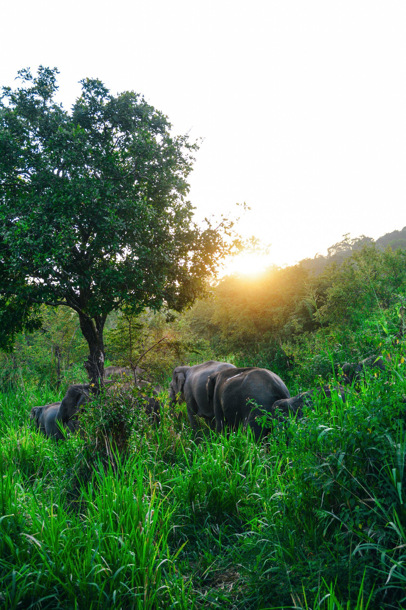 Safari in Mineriya National Park Sri Lanka Elephants (19)