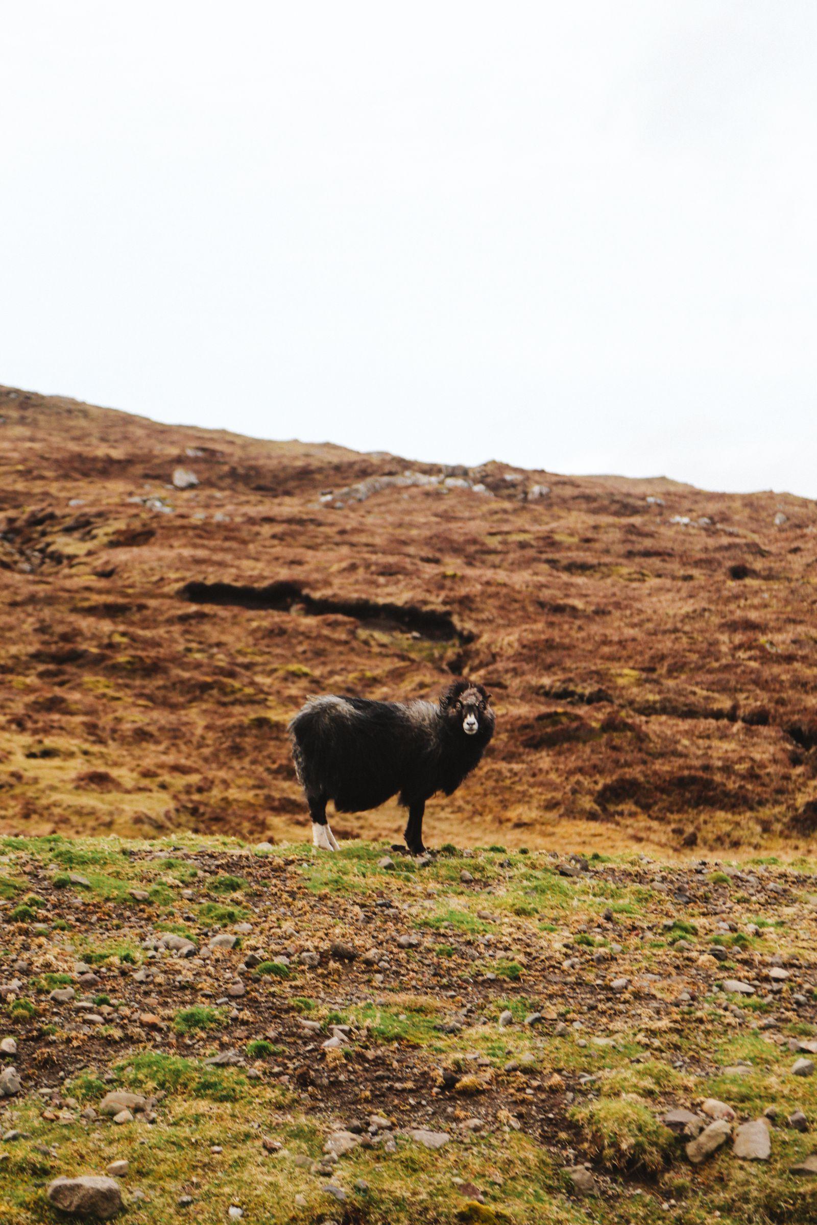 Arrival In The Faroe Islands (2)