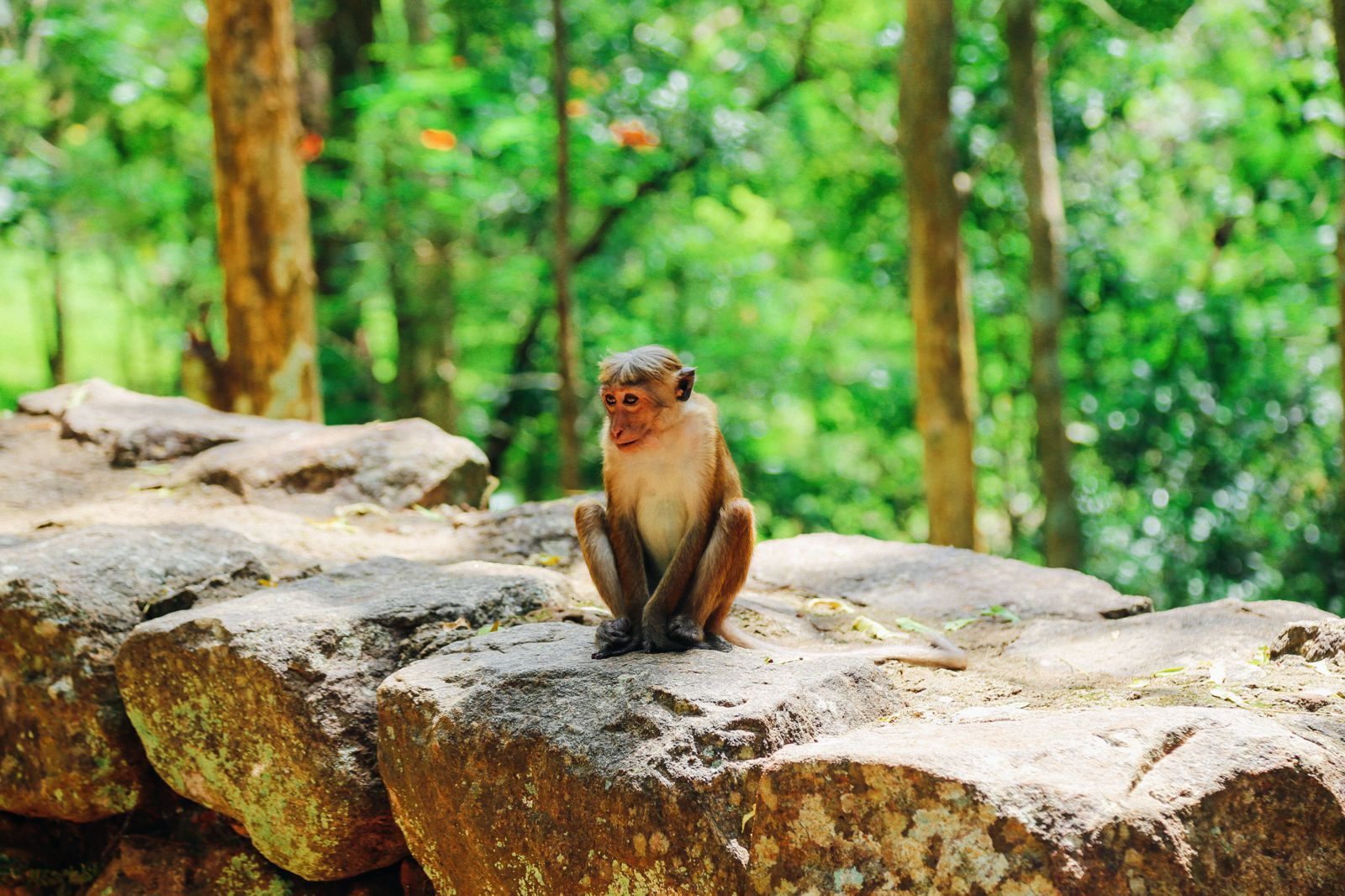 The Complete Guide To Climbing Sri Lanka's UNESCO World Heritage Site Of Sigiriya - Lion Rock (70)