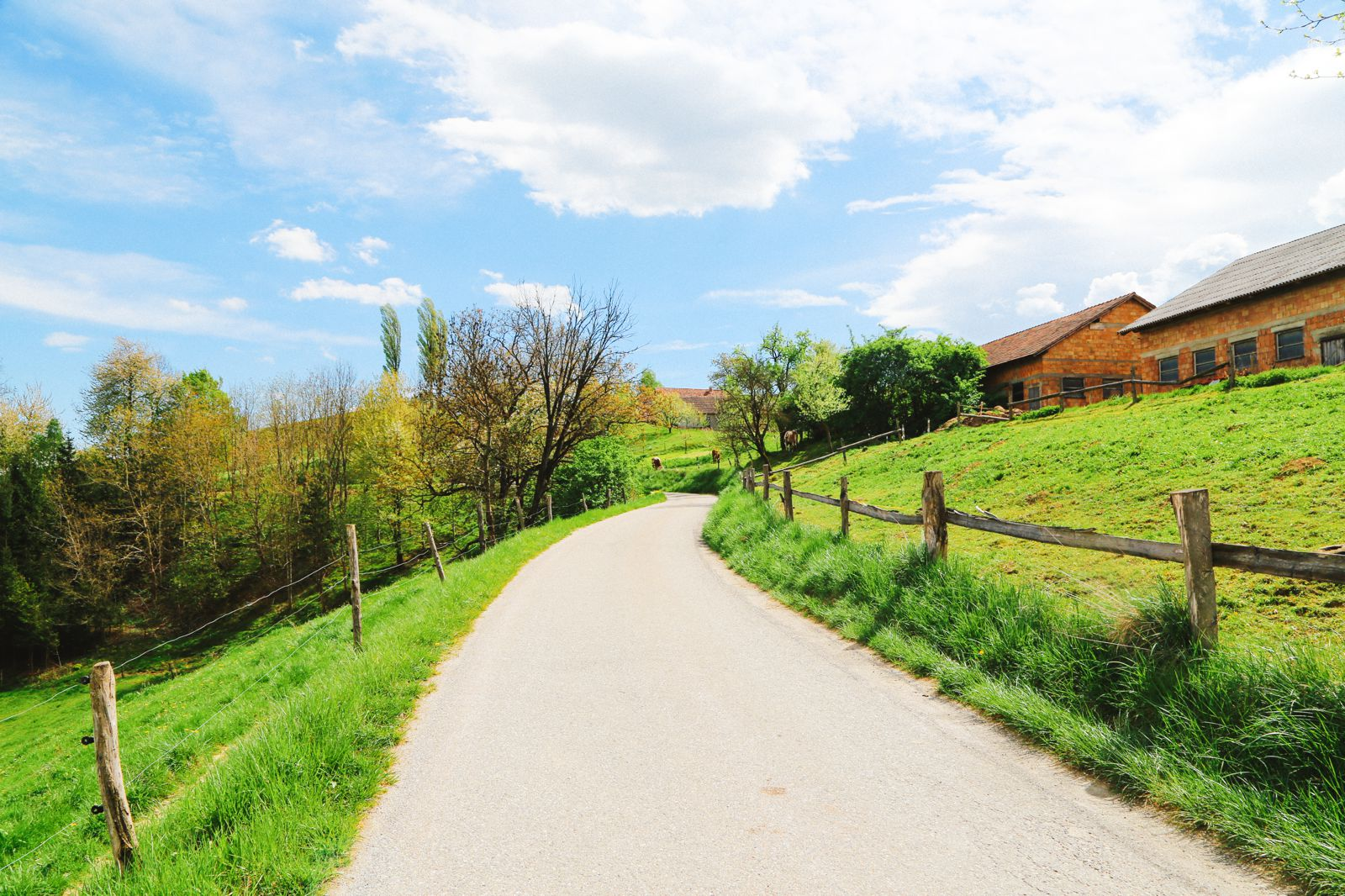 There's A Big Reason You Should Visit Slovenia This Year - The Wine! (72)