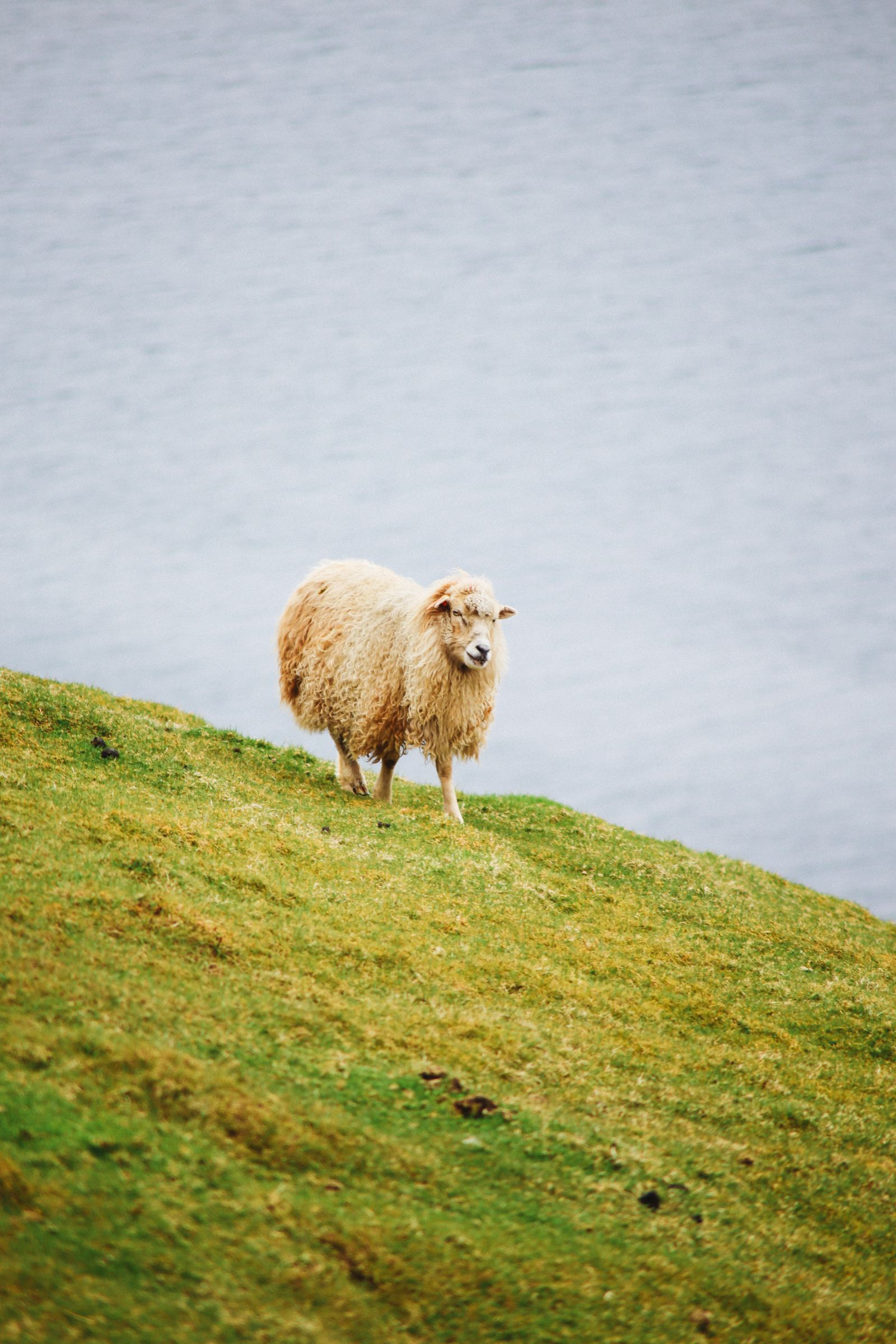 Exploring The Faroe Island's Rugged Buttercup Routes... (26)