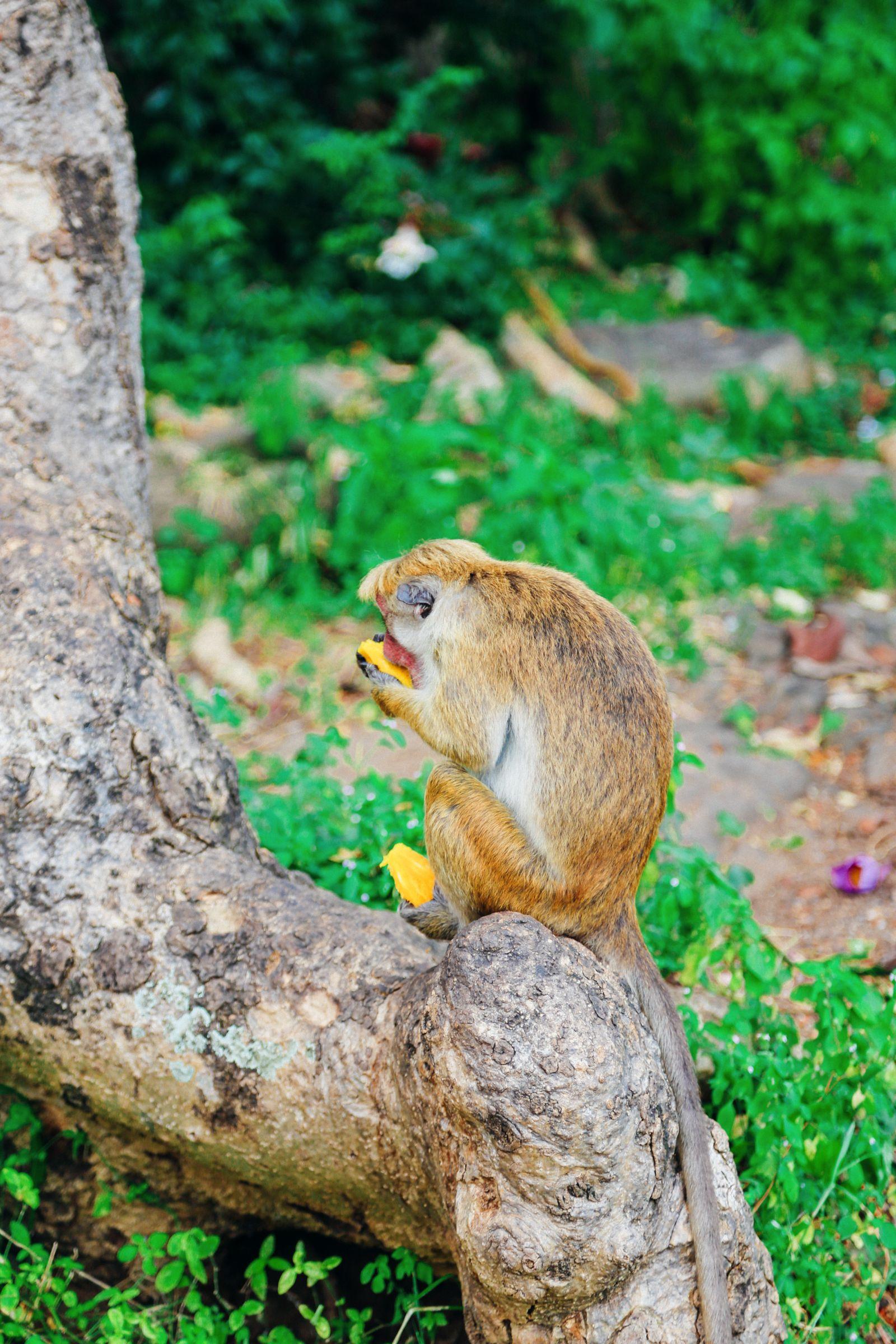 Dambulla Cave Temple And A Trip To Kandy, Sri Lanka (7)