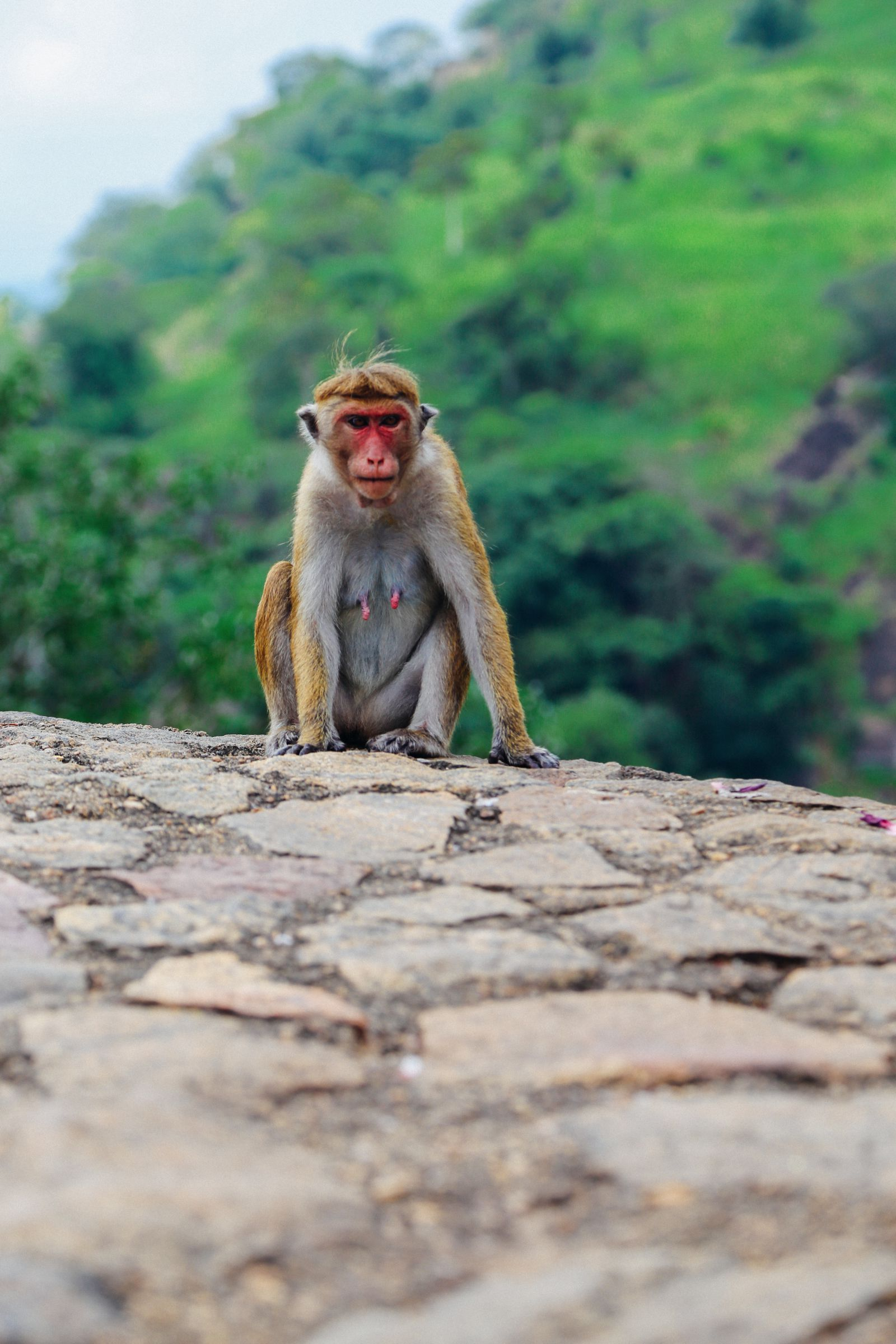 Dambulla Cave Temple And A Trip To Kandy, Sri Lanka (10)