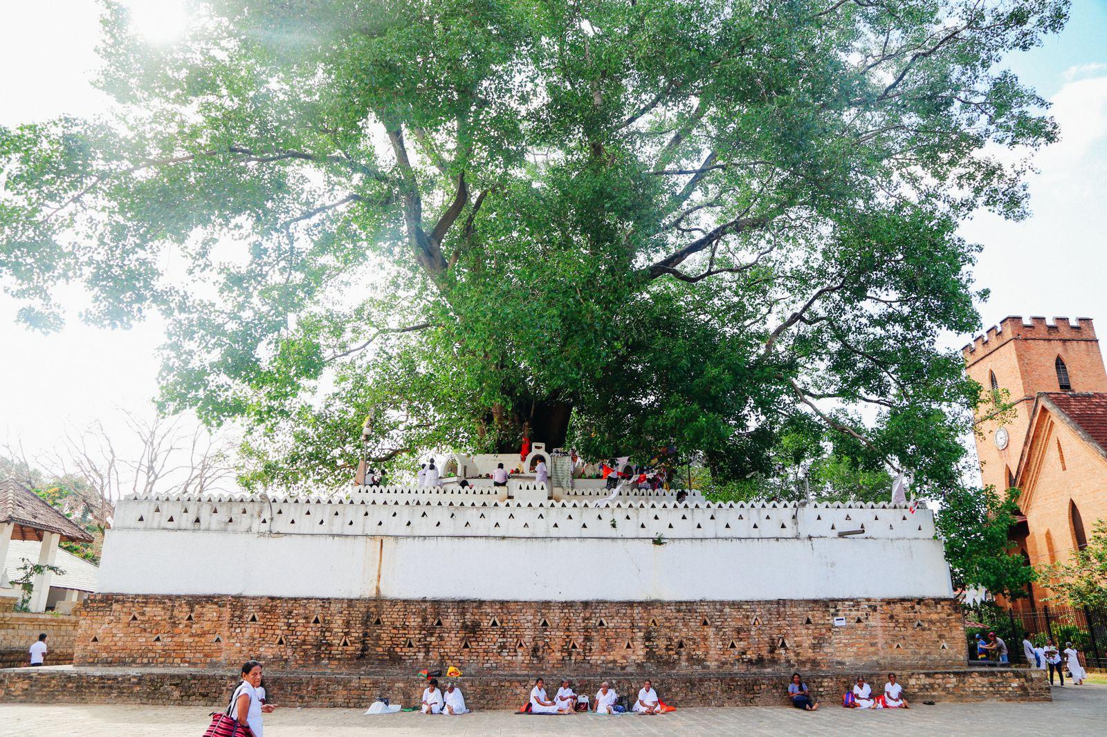 Dambulla Cave Temple And A Trip To Kandy, Sri Lanka (50)