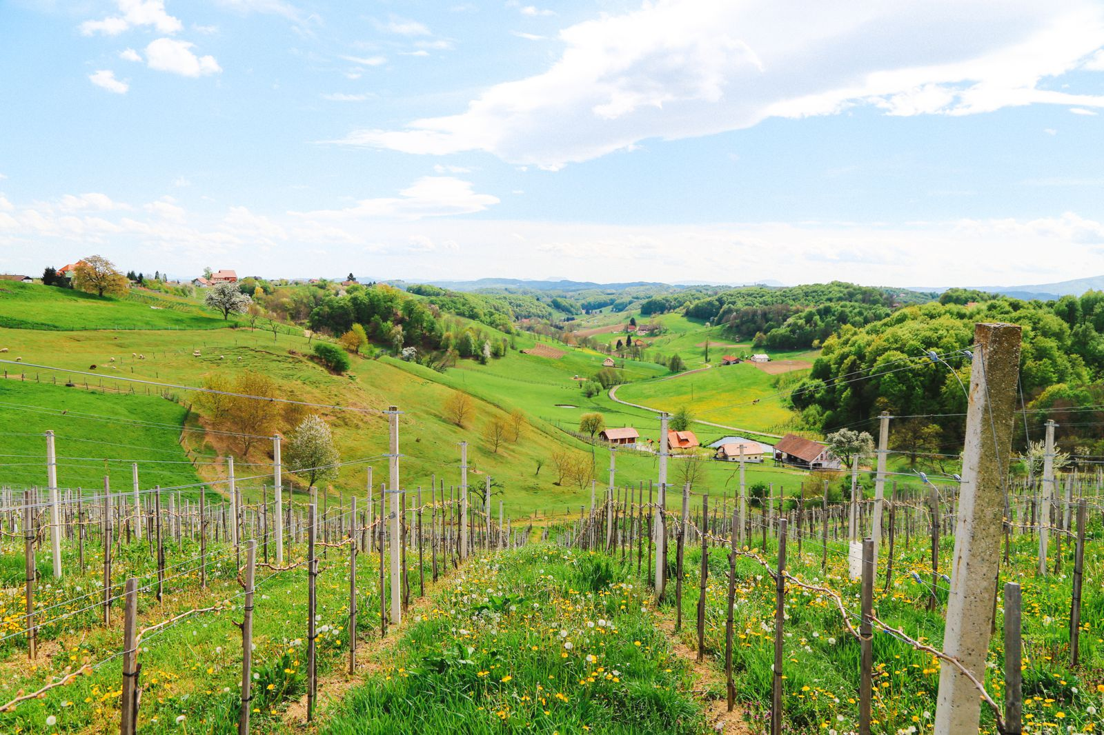 Vineyards, Charcuterie And The Old Historic City Of Maribor, Slovenia (1)