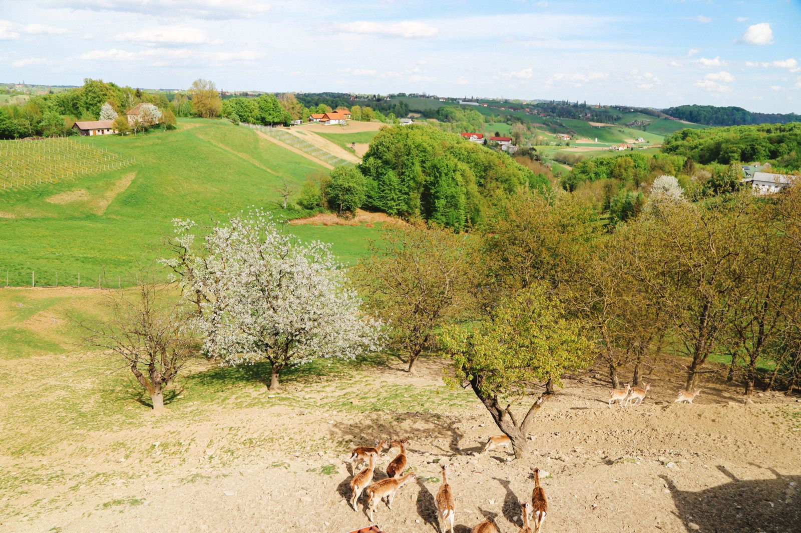Vineyards, Charcuterie And The Old Historic City Of Maribor, Slovenia (13)