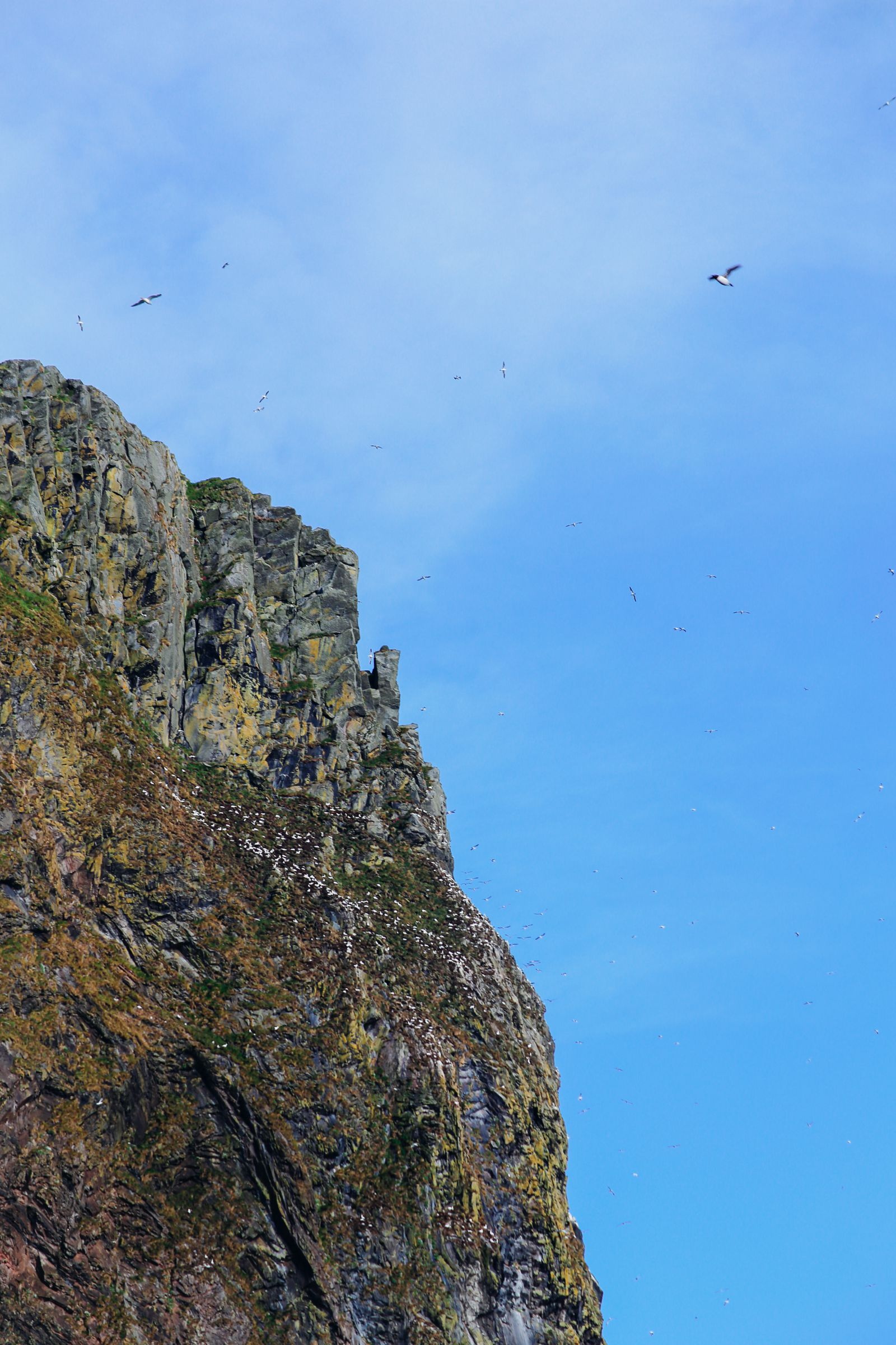 Where To Find Puffins In Norway! (19)