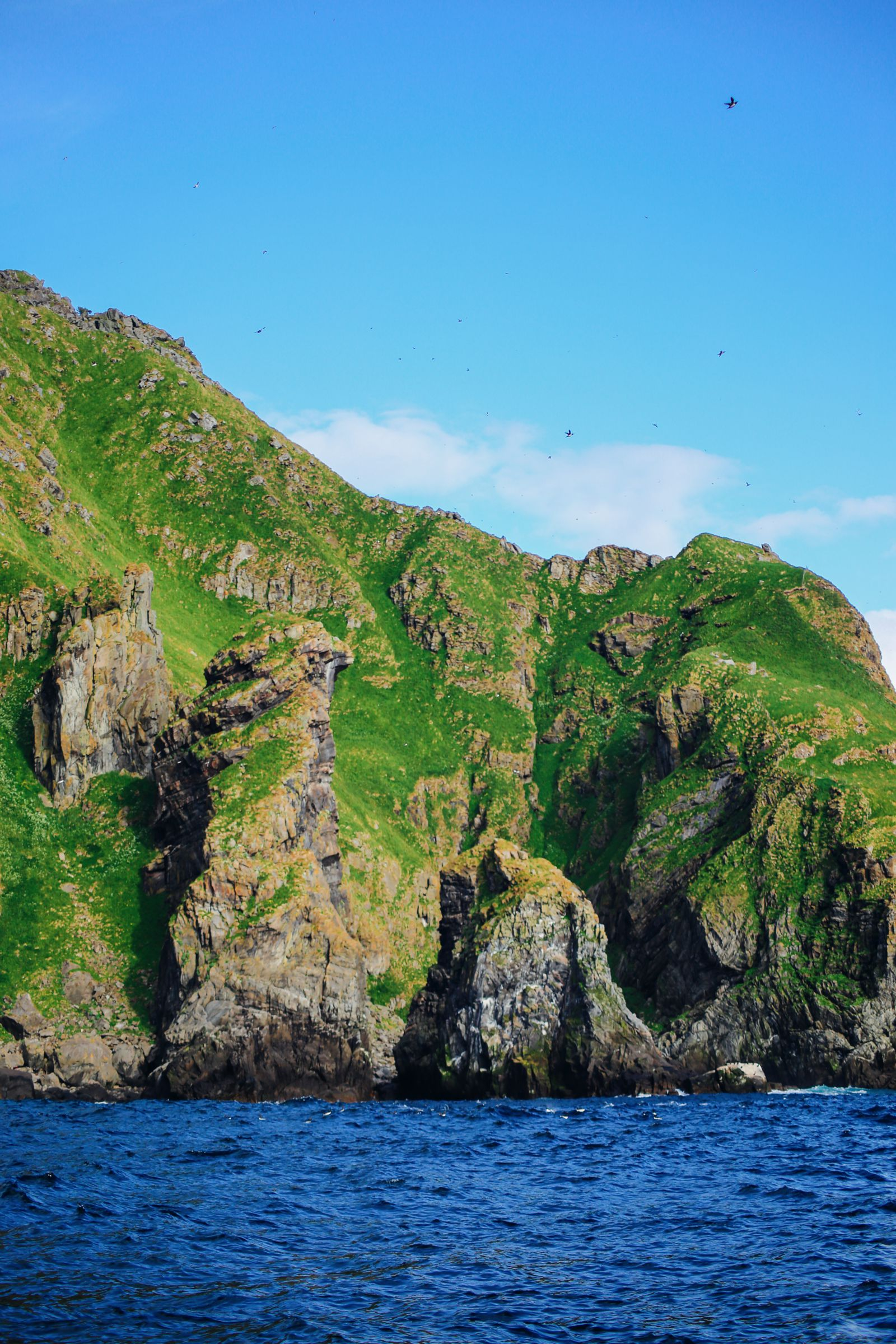 Where To Find Puffins In Norway! (22)