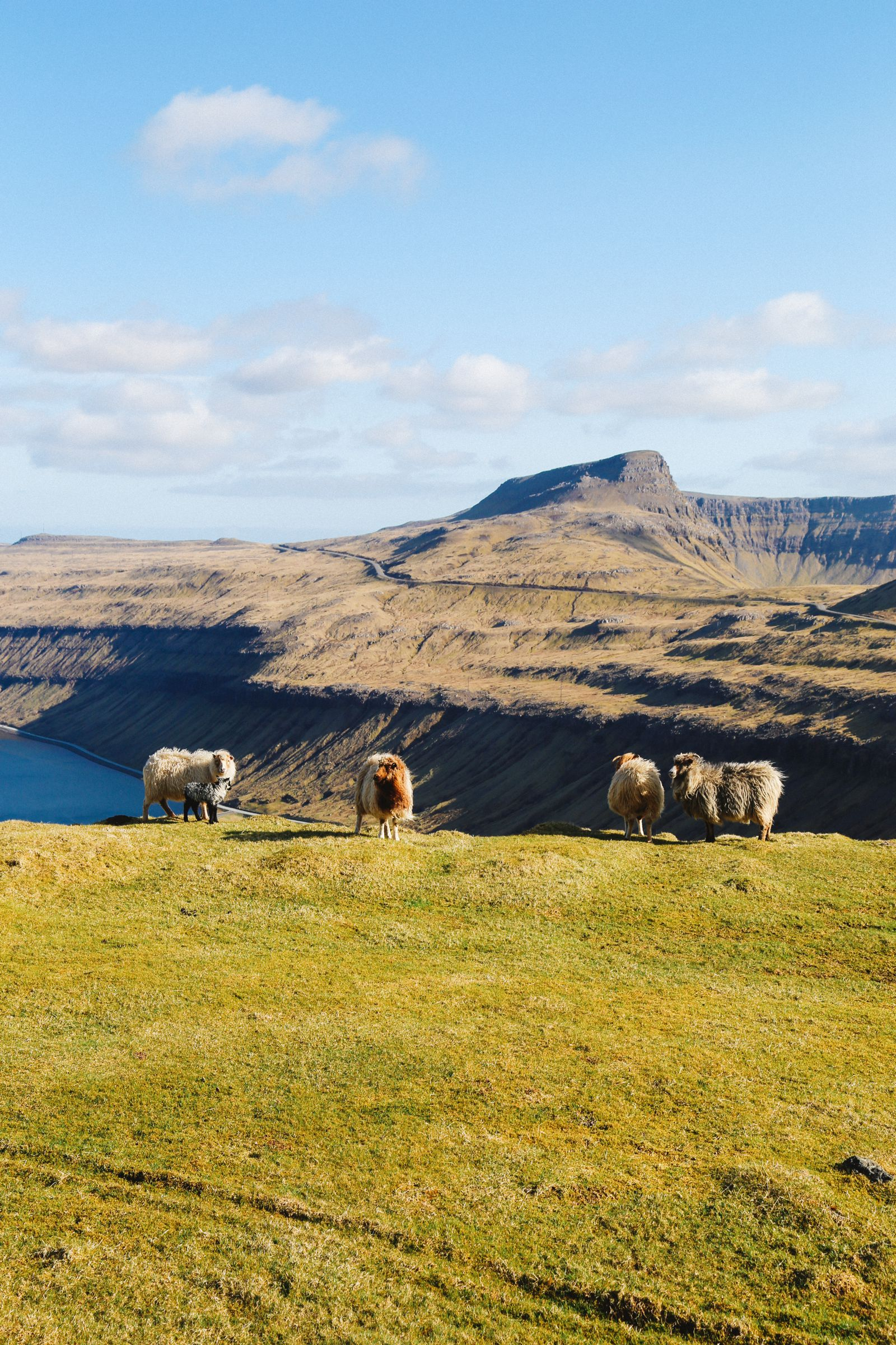 Our Final 24 Hours In The Faroe Islands... (12)