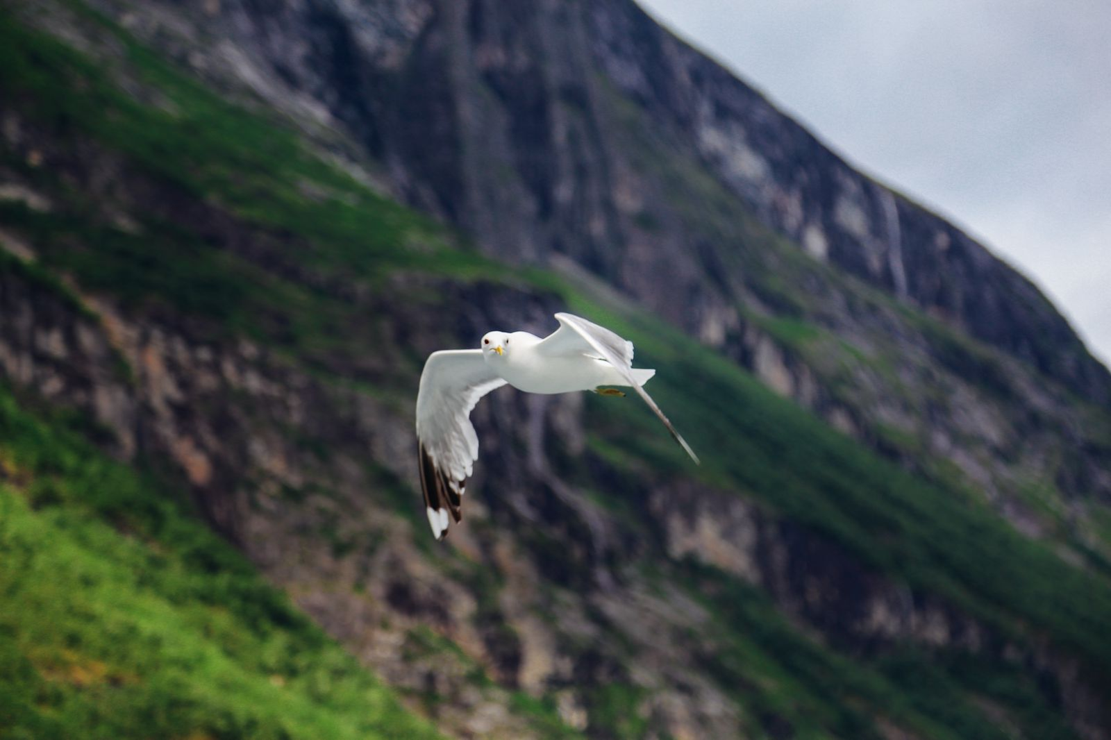 A Journey Through The Beautiful Geirangerfjord, Norway (14)