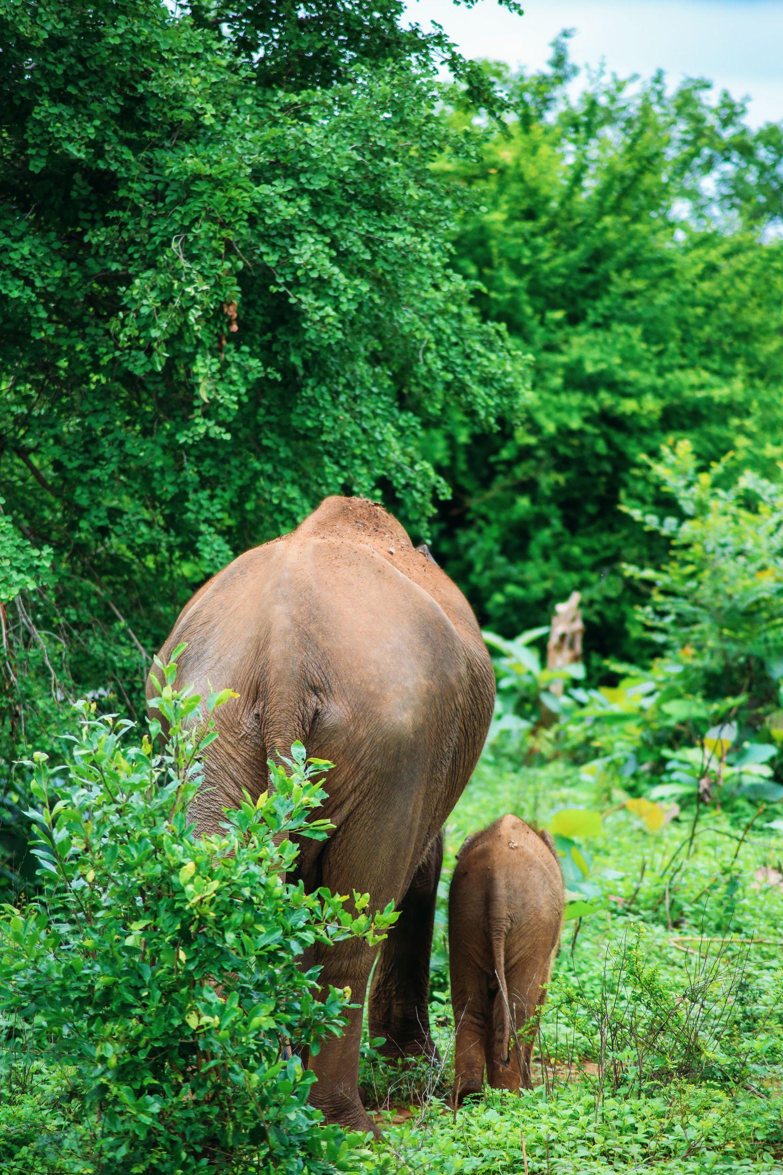 A Taste Of Sri Lanka... (11)