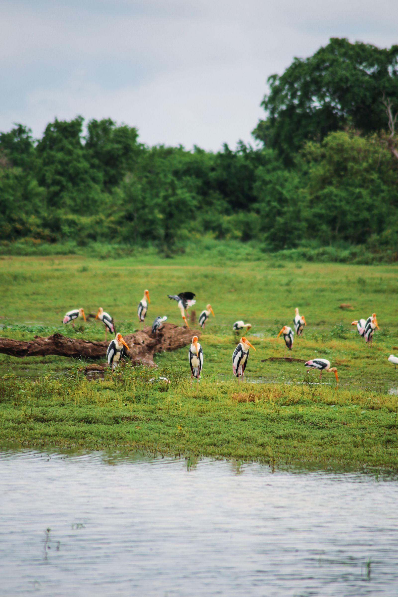 A Taste Of Sri Lanka... (4)