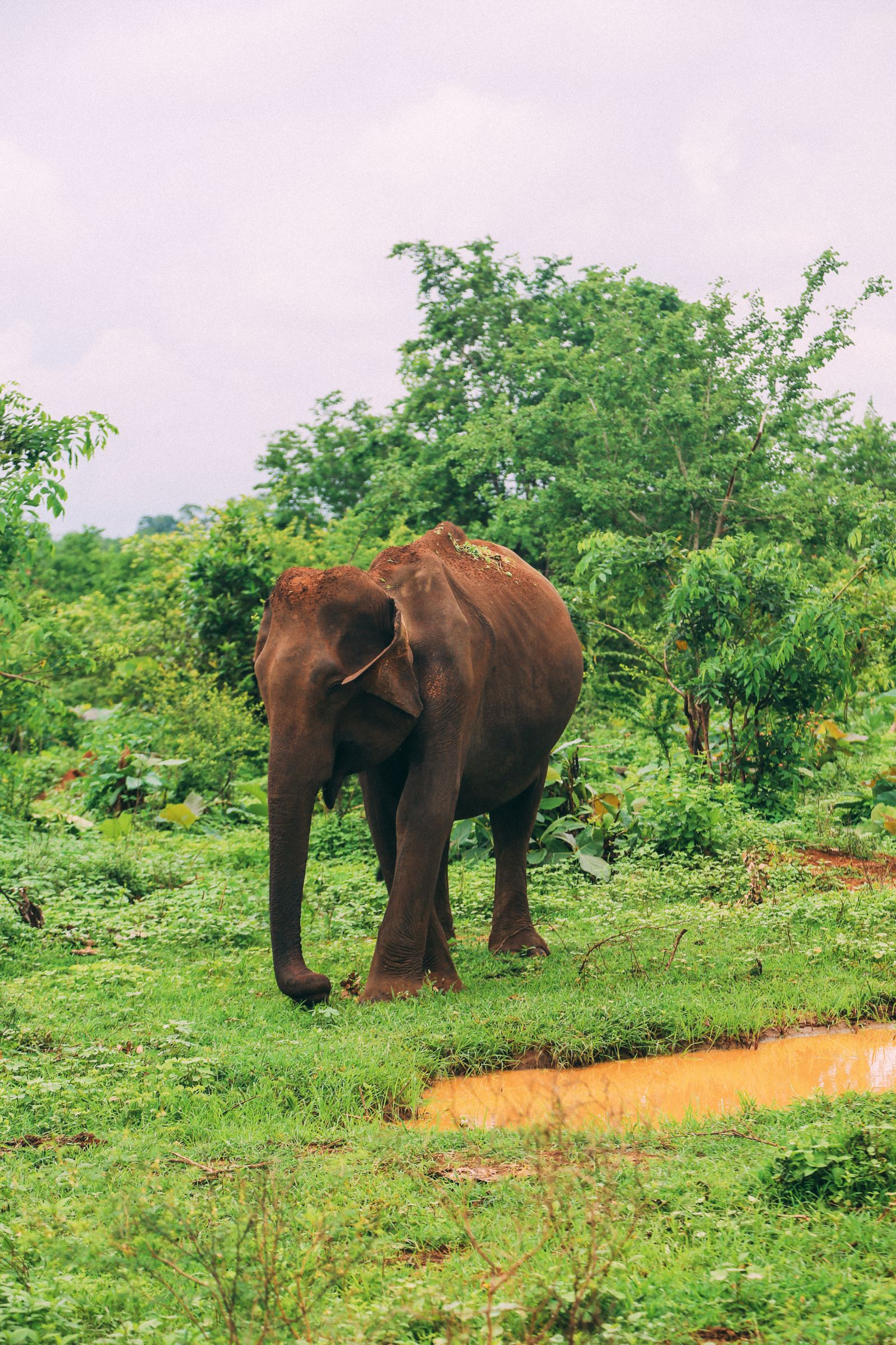 On Elephant Safari In Udawalawe, Sri Lanka (3)
