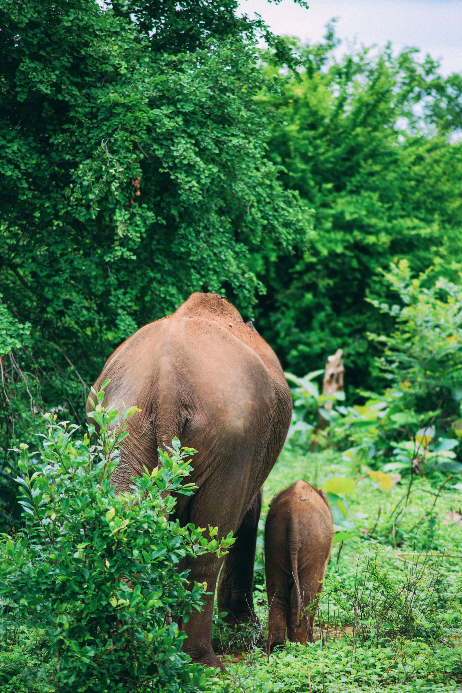 On Elephant Safari In Udawalawe, Sri Lanka (6)