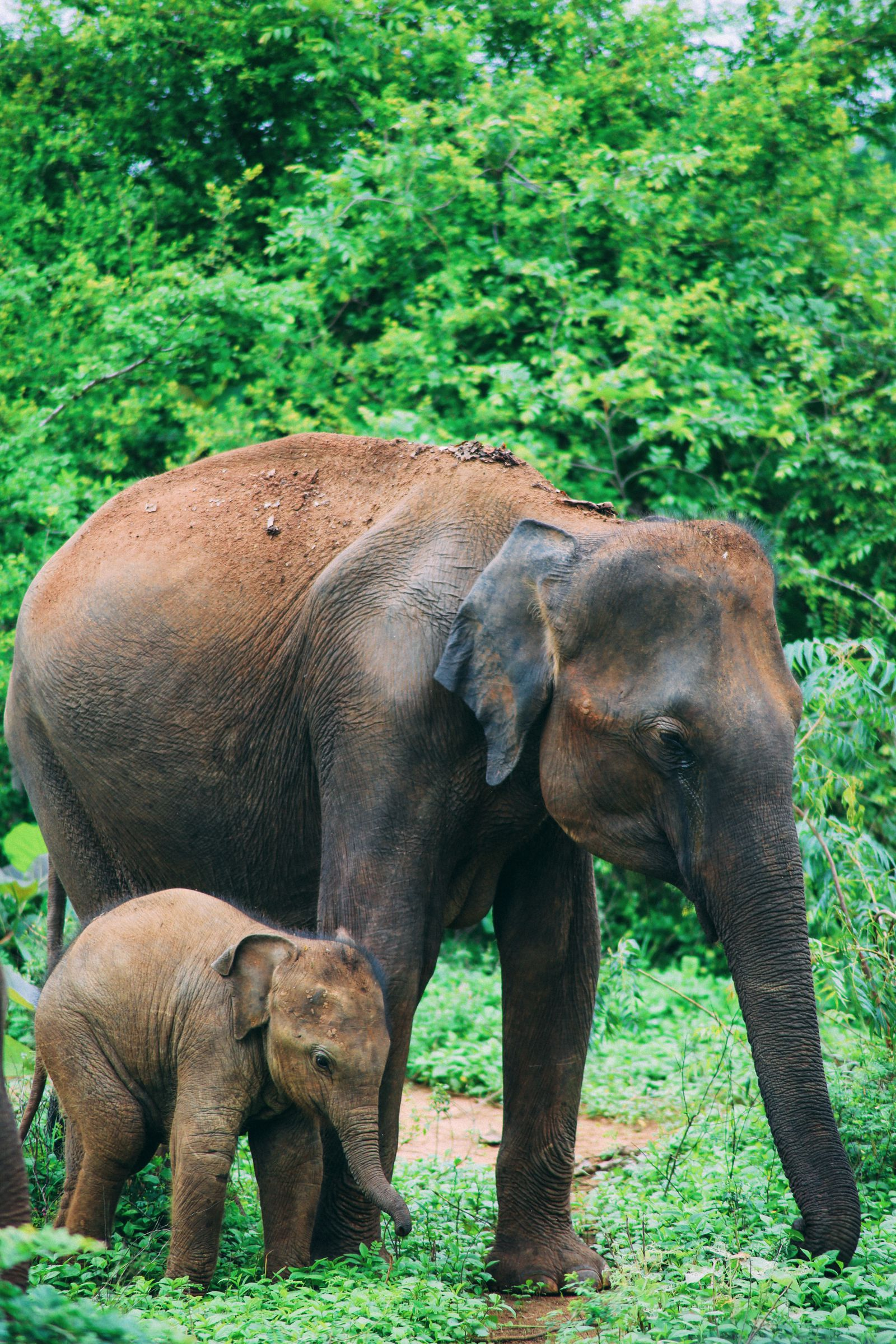 On Elephant Safari In Udawalawe, Sri Lanka (8)