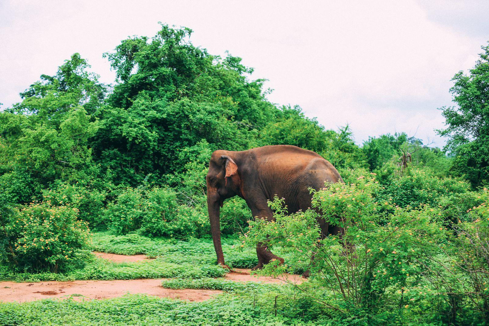 On Elephant Safari In Udawalawe, Sri Lanka (20)