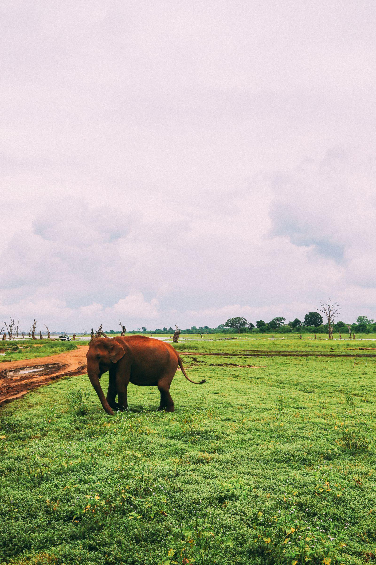 On Elephant Safari In Udawalawe, Sri Lanka (30)