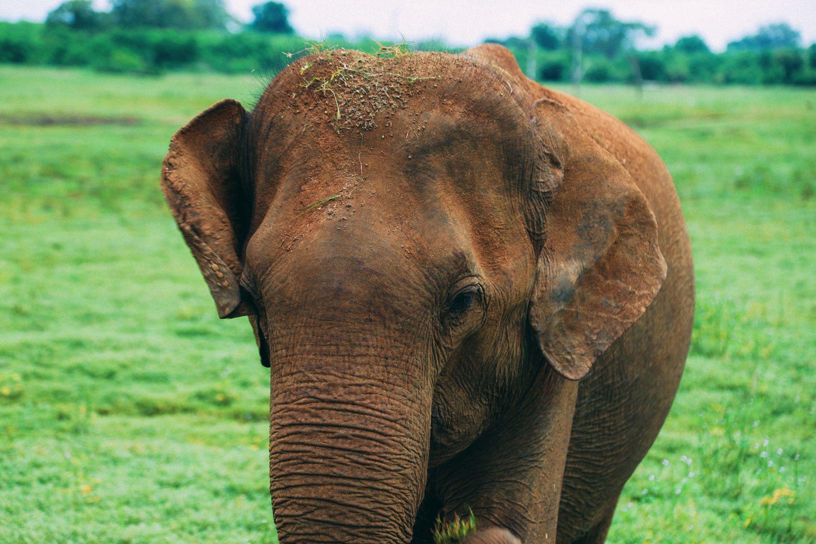 On Elephant Safari In Udawalawe, Sri Lanka (33)