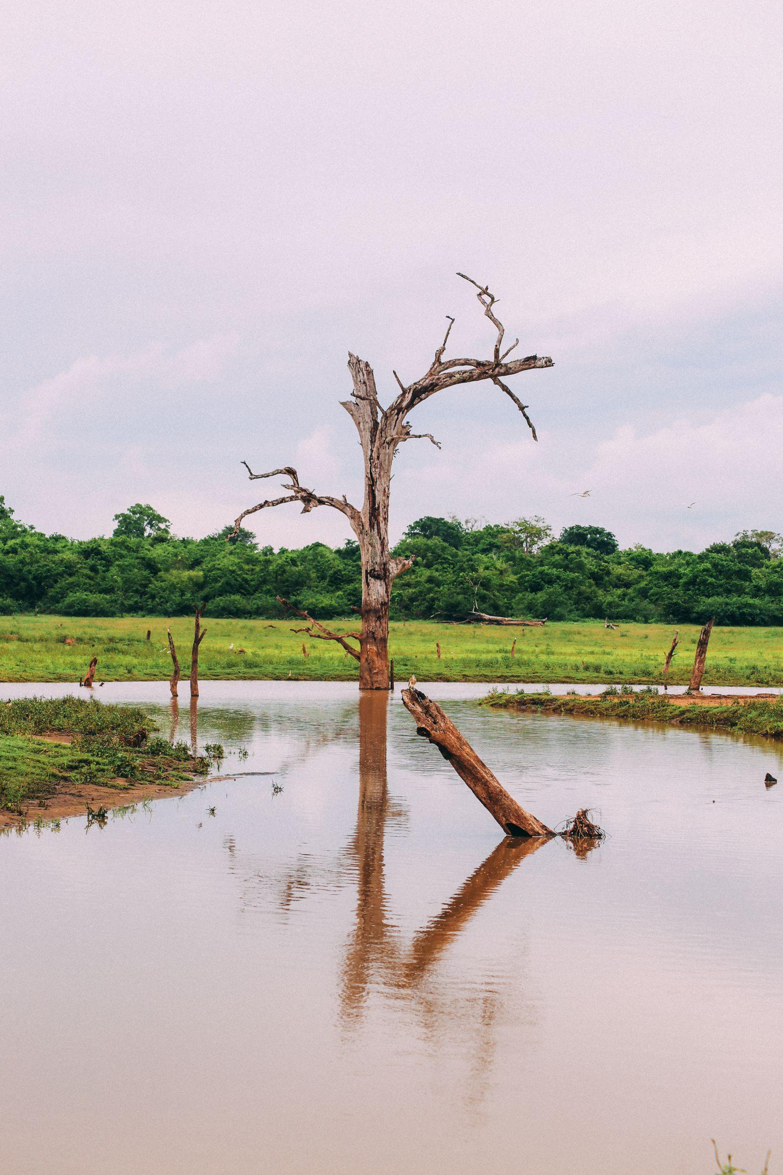 On Elephant Safari In Udawalawe, Sri Lanka (36)