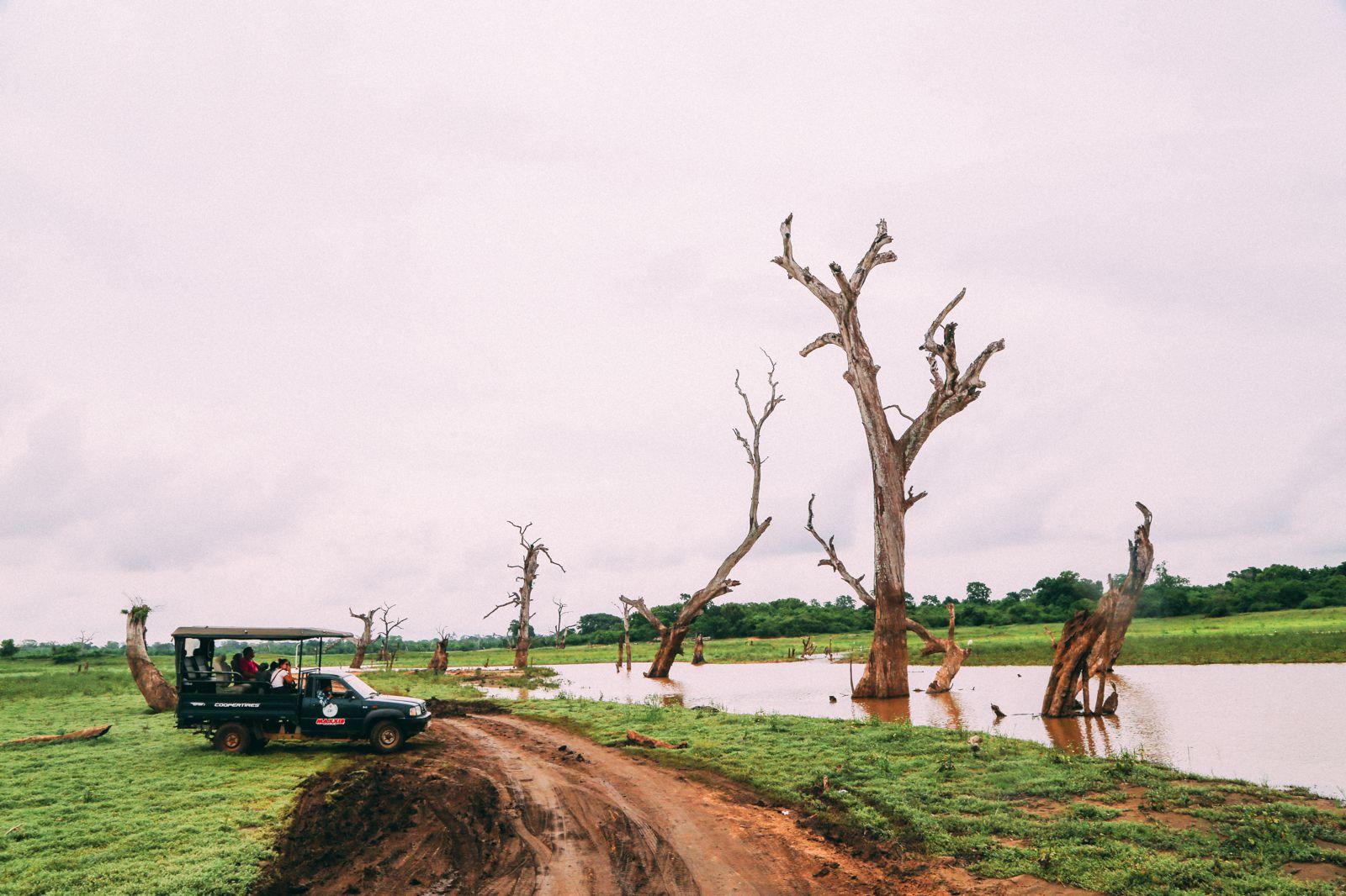 On Elephant Safari In Udawalawe, Sri Lanka (38)