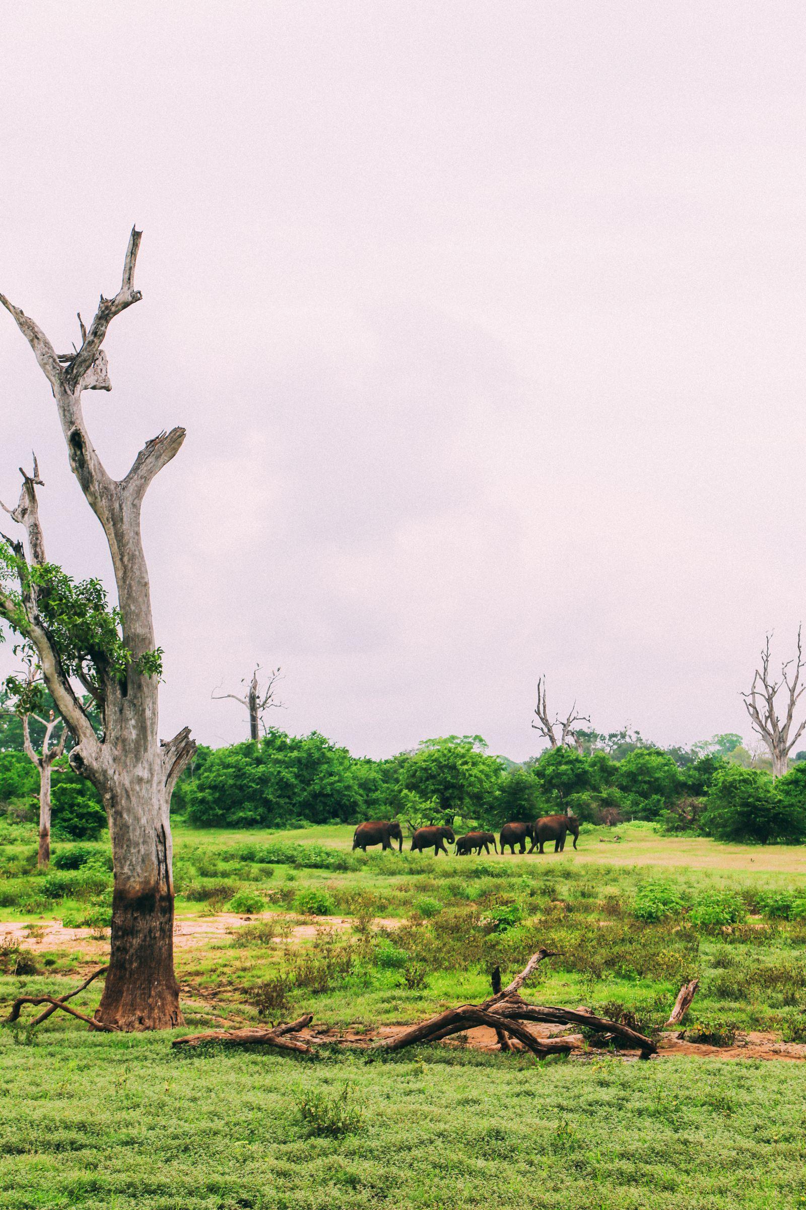 On Elephant Safari In Udawalawe, Sri Lanka (44)