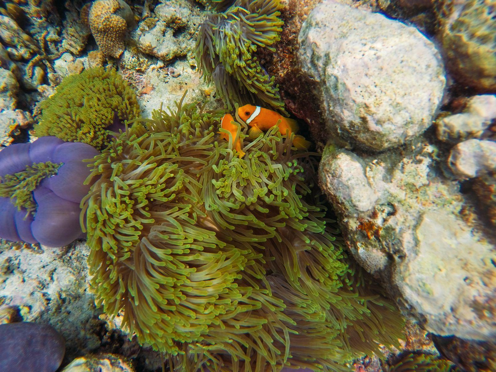 Reef Explorers... At the Angsana Velavaru Maldives (35)