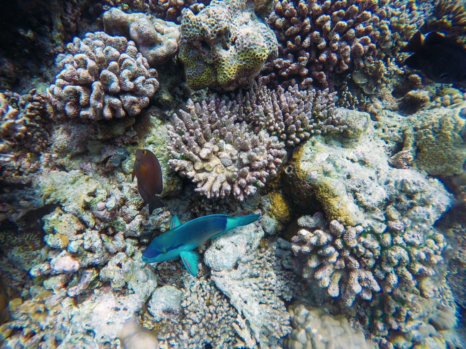 Reef Explorers... At the Angsana Velavaru Maldives (40)