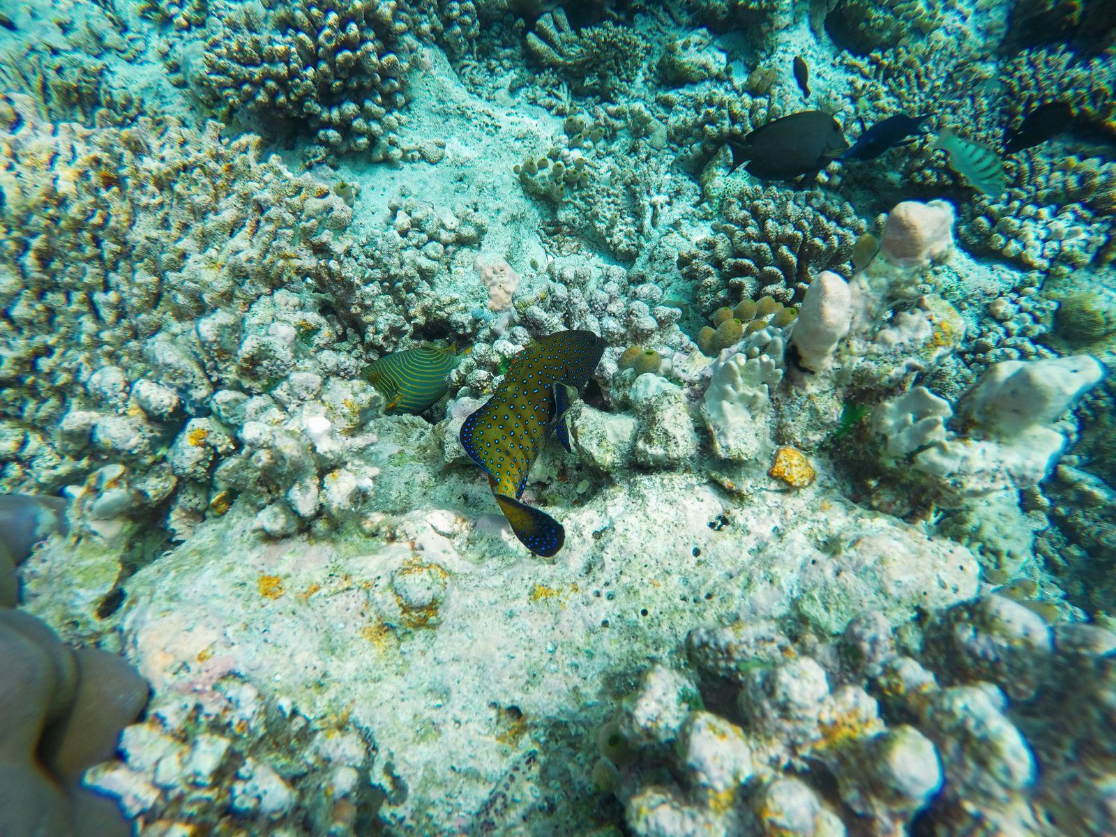Reef Explorers... At the Angsana Velavaru Maldives (42)