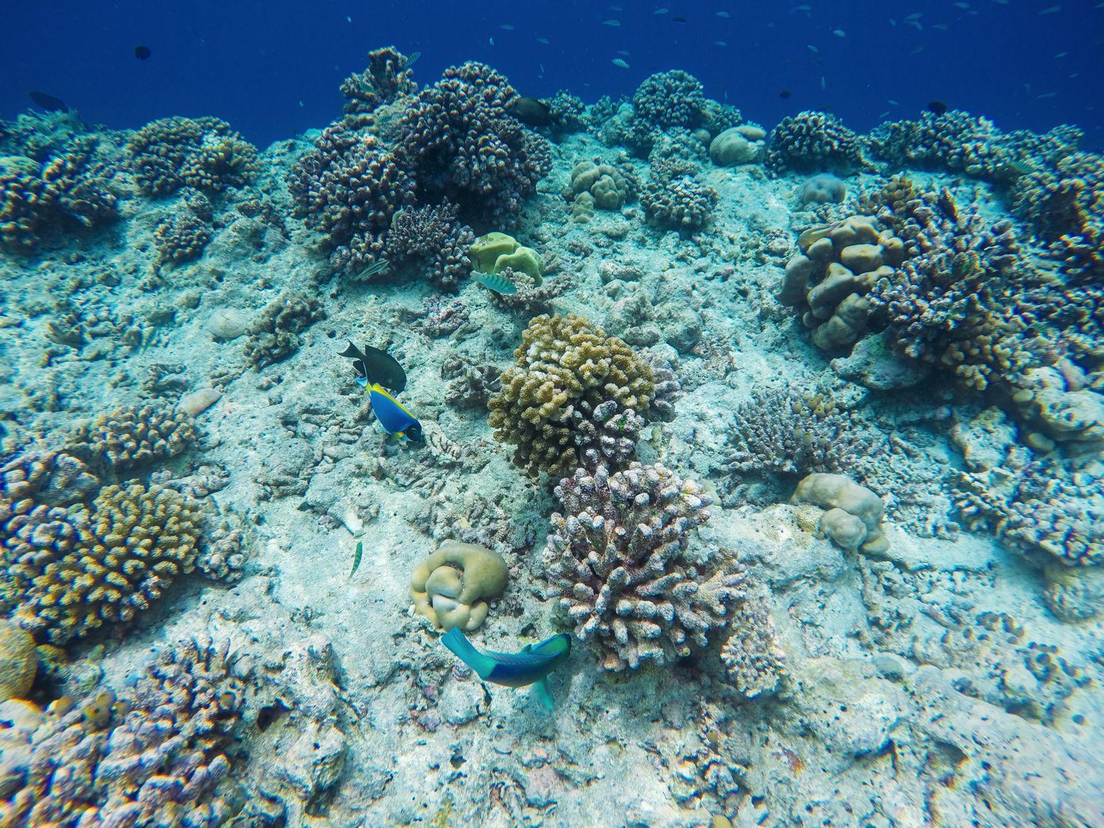 Reef Explorers... At the Angsana Velavaru Maldives (43)
