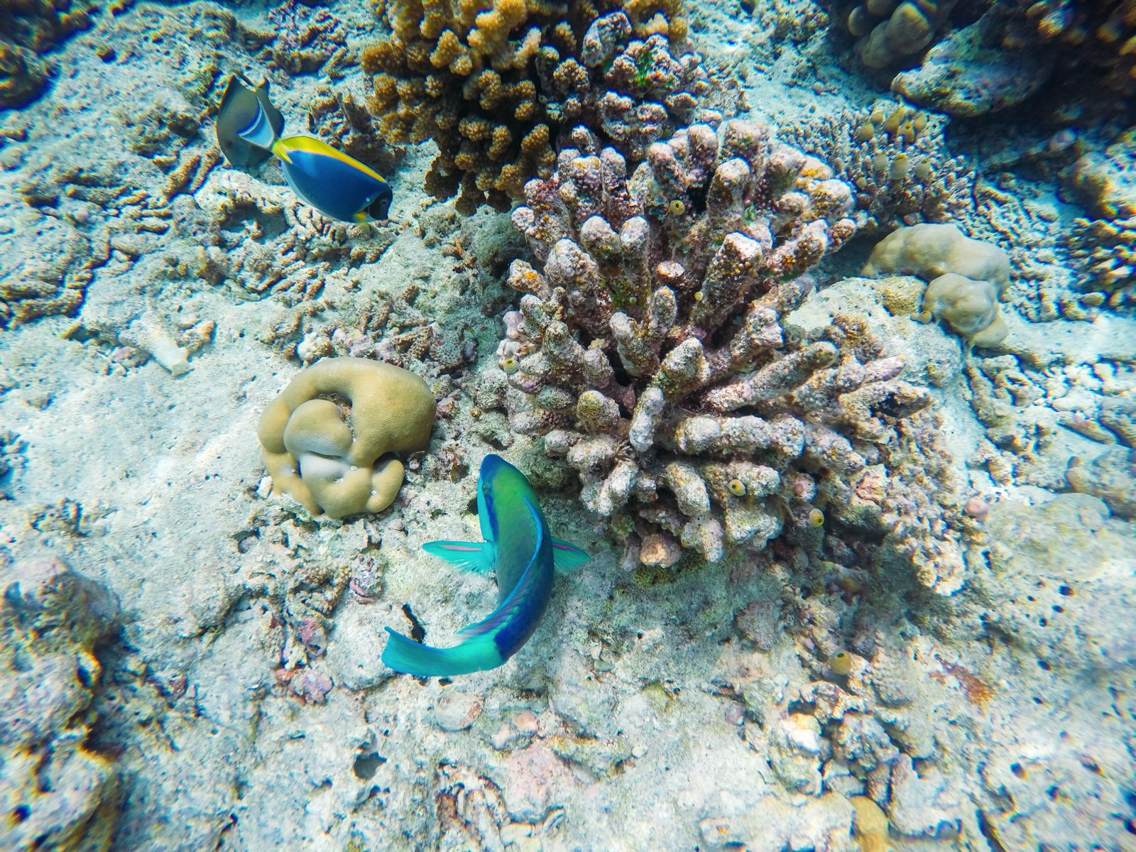 Reef Explorers... At the Angsana Velavaru Maldives (44)