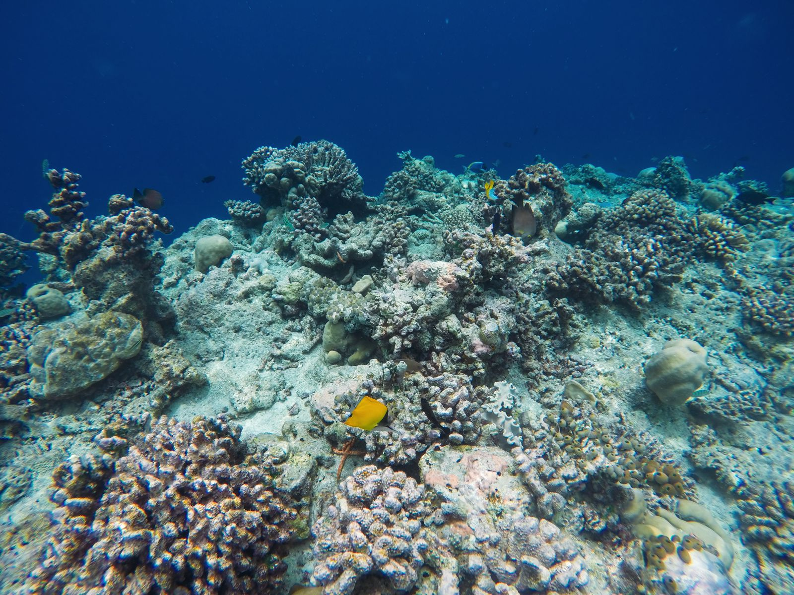 Reef Explorers... At the Angsana Velavaru Maldives (45)