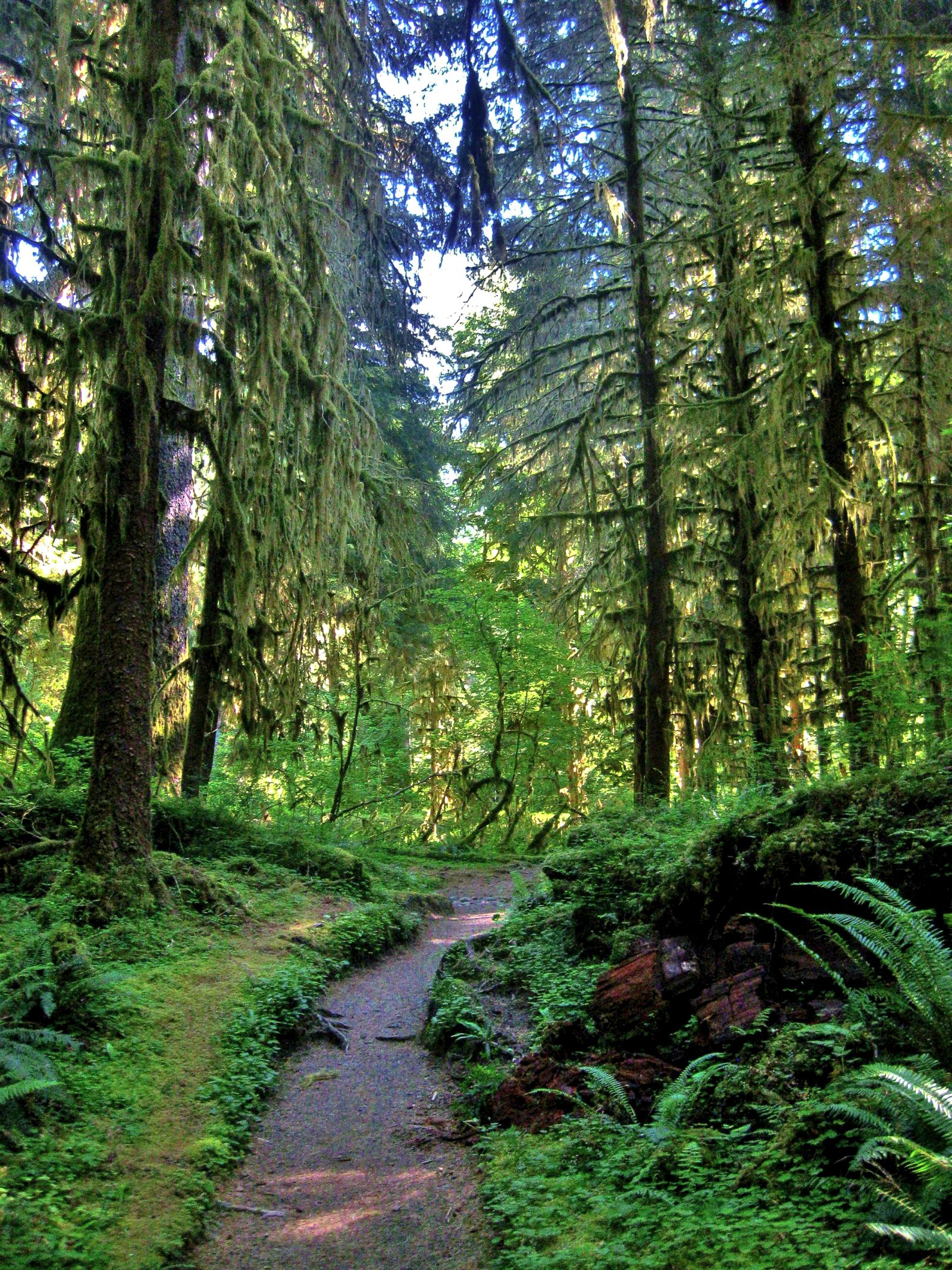 12 Of The Best Hiking Routes In Washington State, USA (15)