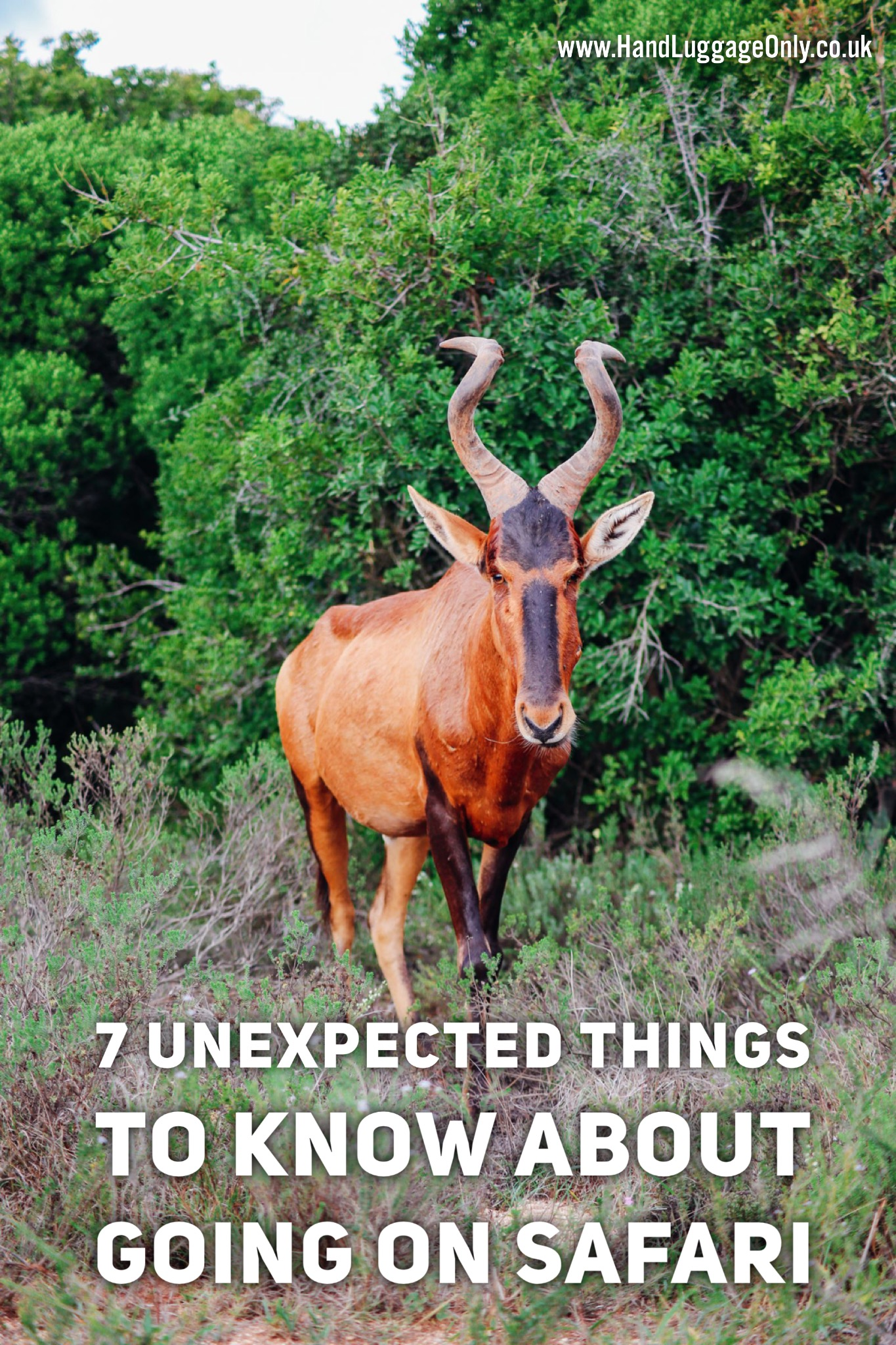 7 Unexpected Things You Need To Know Before Booking Your Safari In South Africa (1)