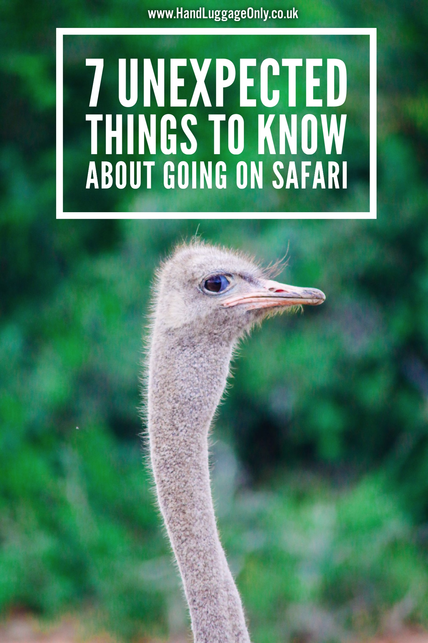7 Unexpected Things You Need To Know Before Booking Your Safari In South Africa (2)
