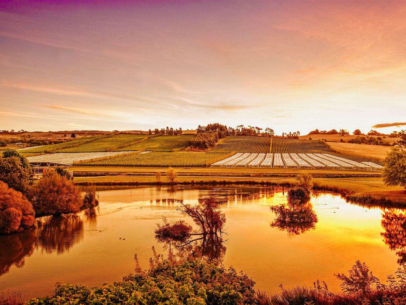 10 Incredible Vineyards You Have To Visit In Australia (7)