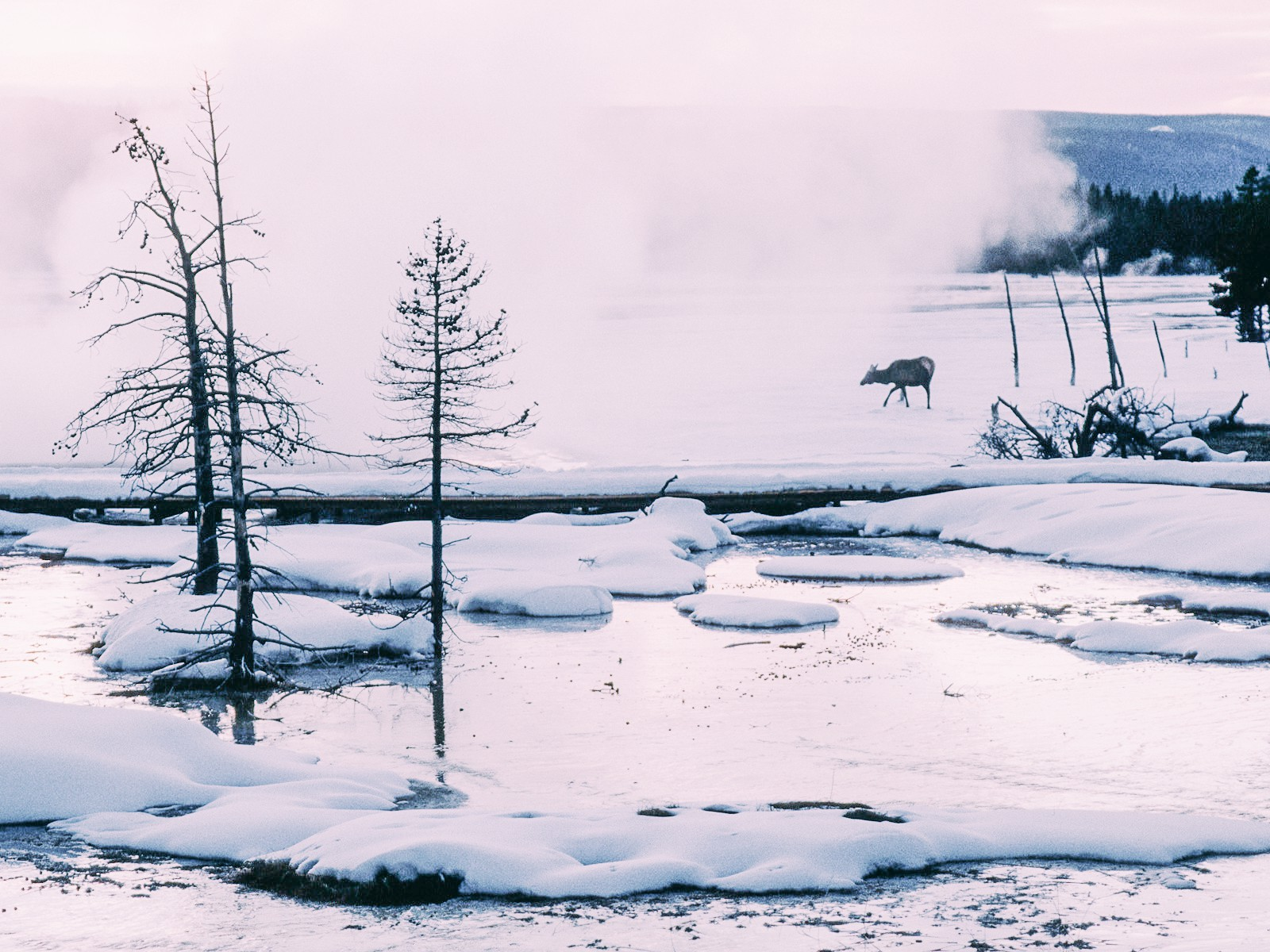 10 Dramatic Sights You Have To See In Yellowstone National Park, USA (11)