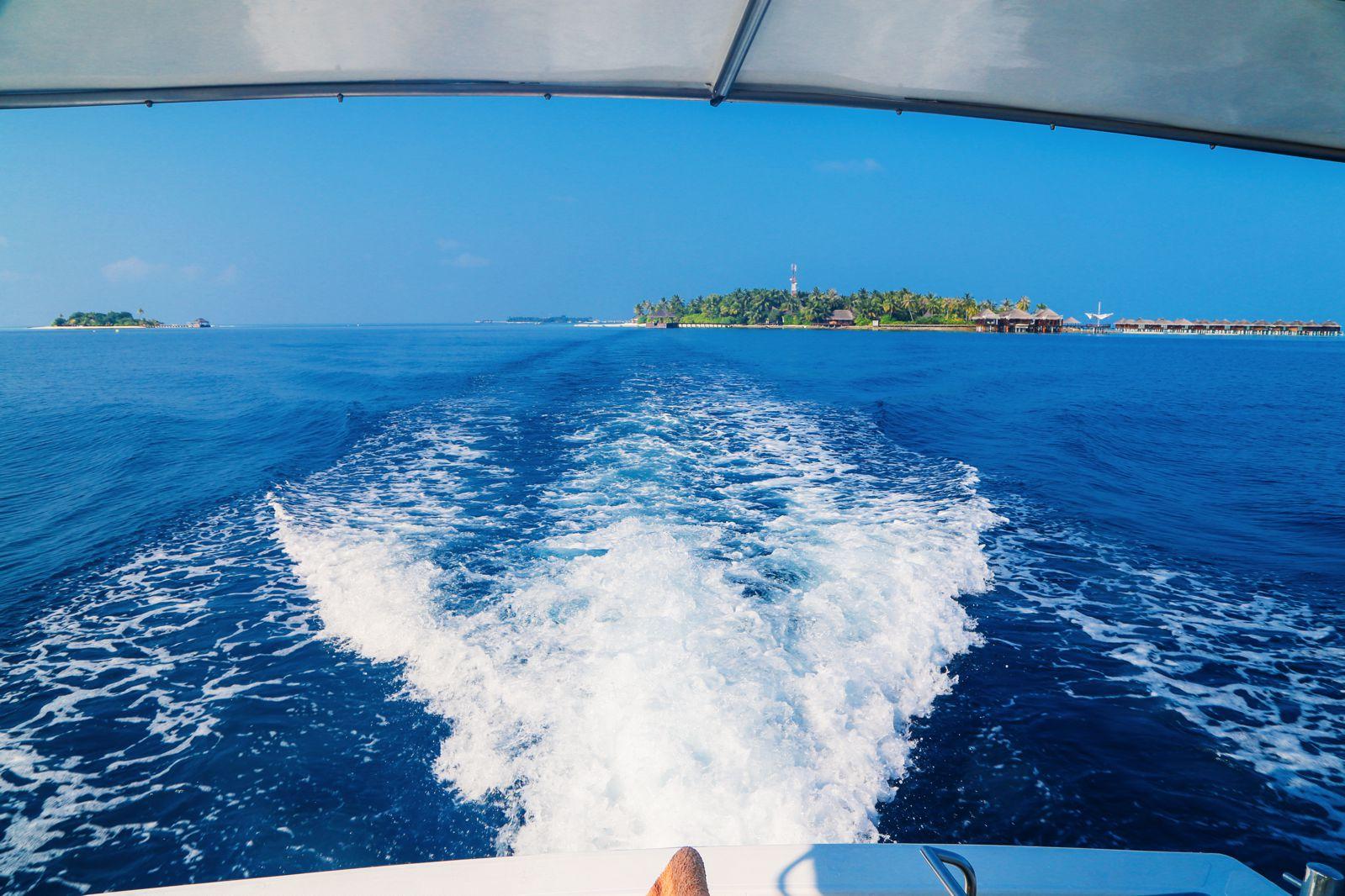 Maafushivaru, Birthing Dolphins And Swimming With Manta Rays... In The Maldives (33)