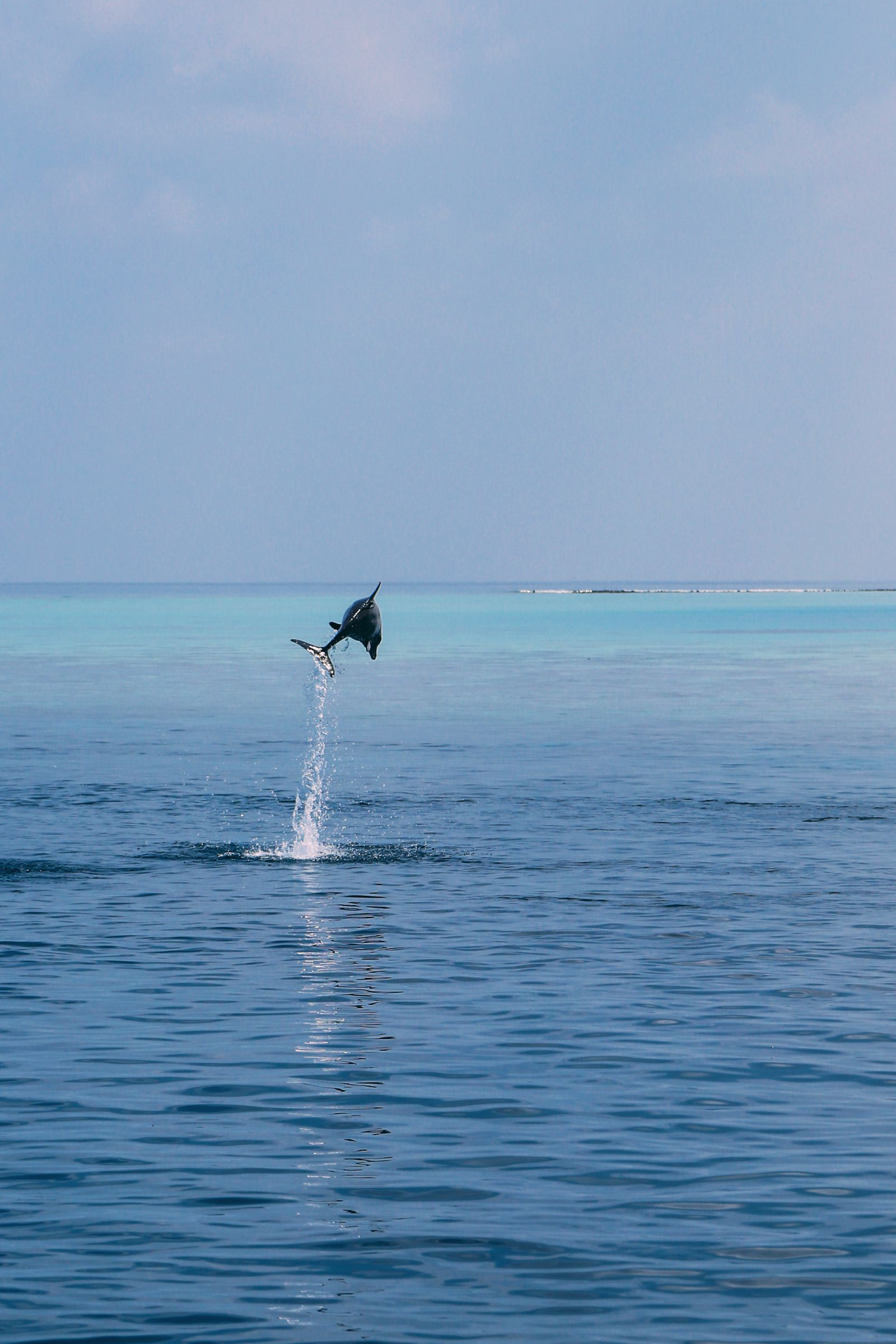 Maafushivaru, Birthing Dolphins And Swimming With Manta Rays... In The Maldives (41)