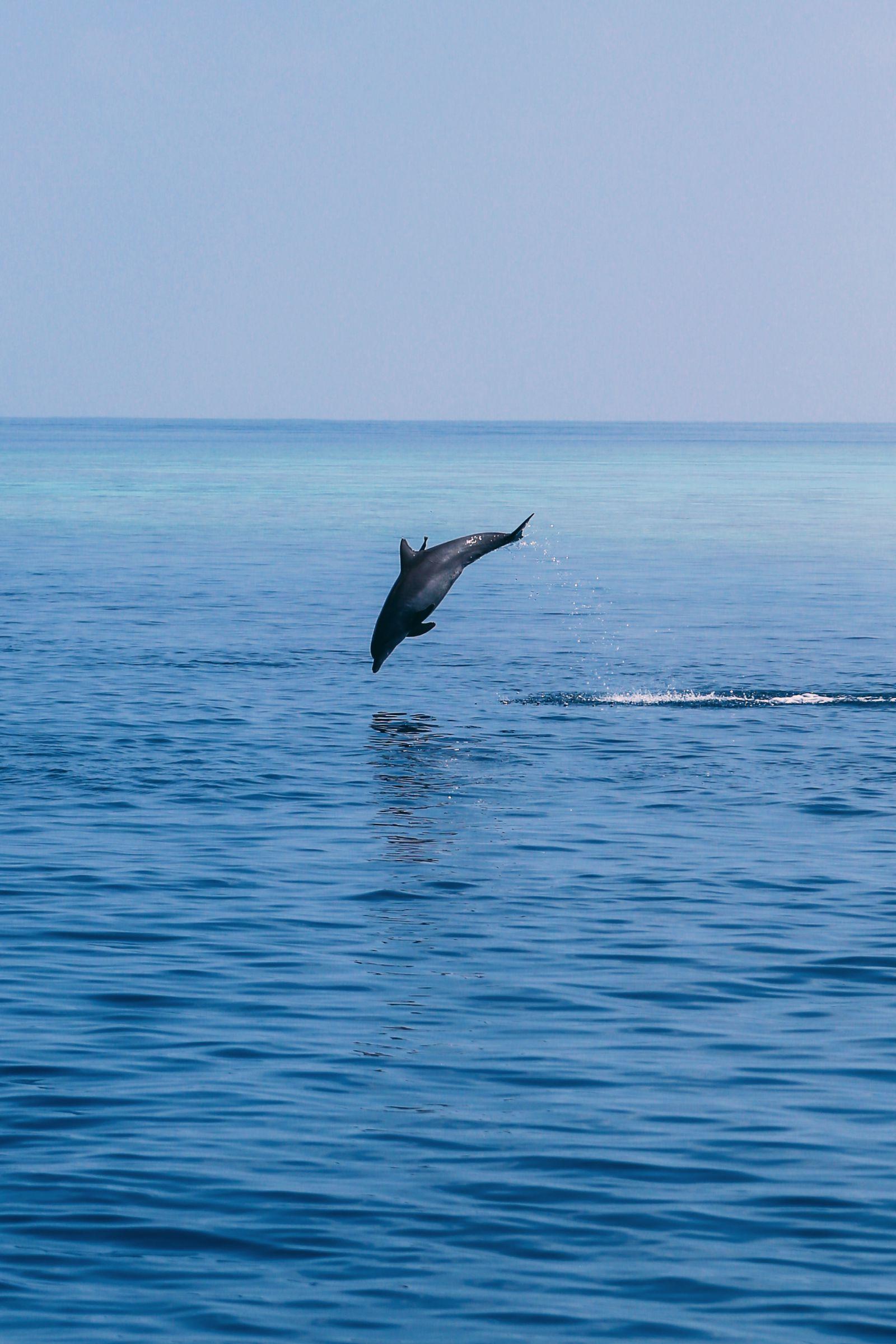 Maafushivaru, Birthing Dolphins And Swimming With Manta Rays... In The Maldives (45)