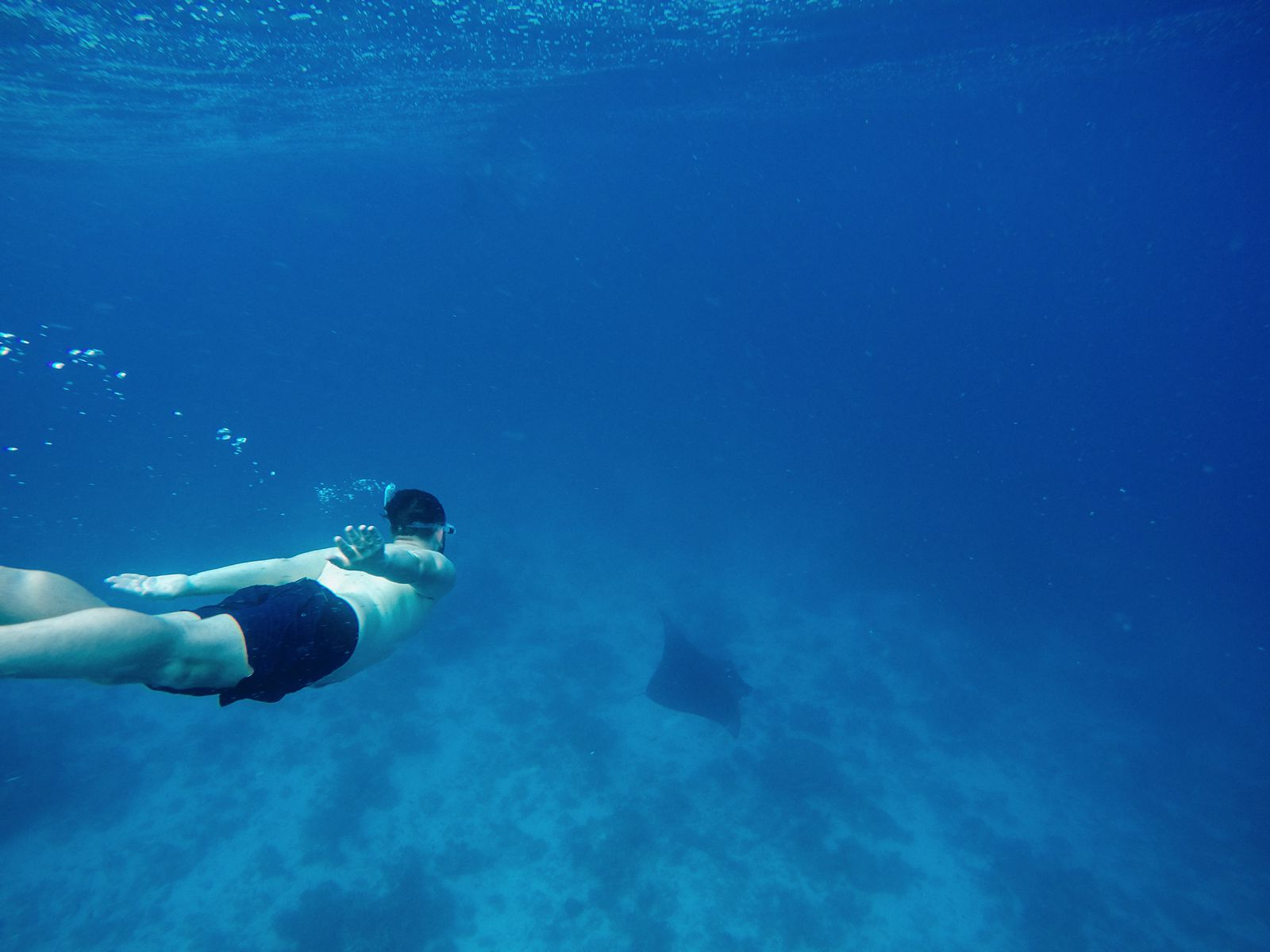 Maafushivaru, Birthing Dolphins And Swimming With Manta Rays... In The Maldives (56)